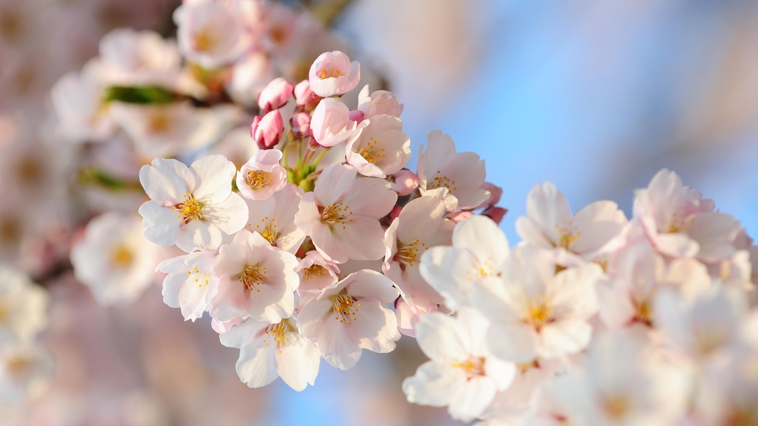 картинки на рабочий стол большой формат весна этот светлый