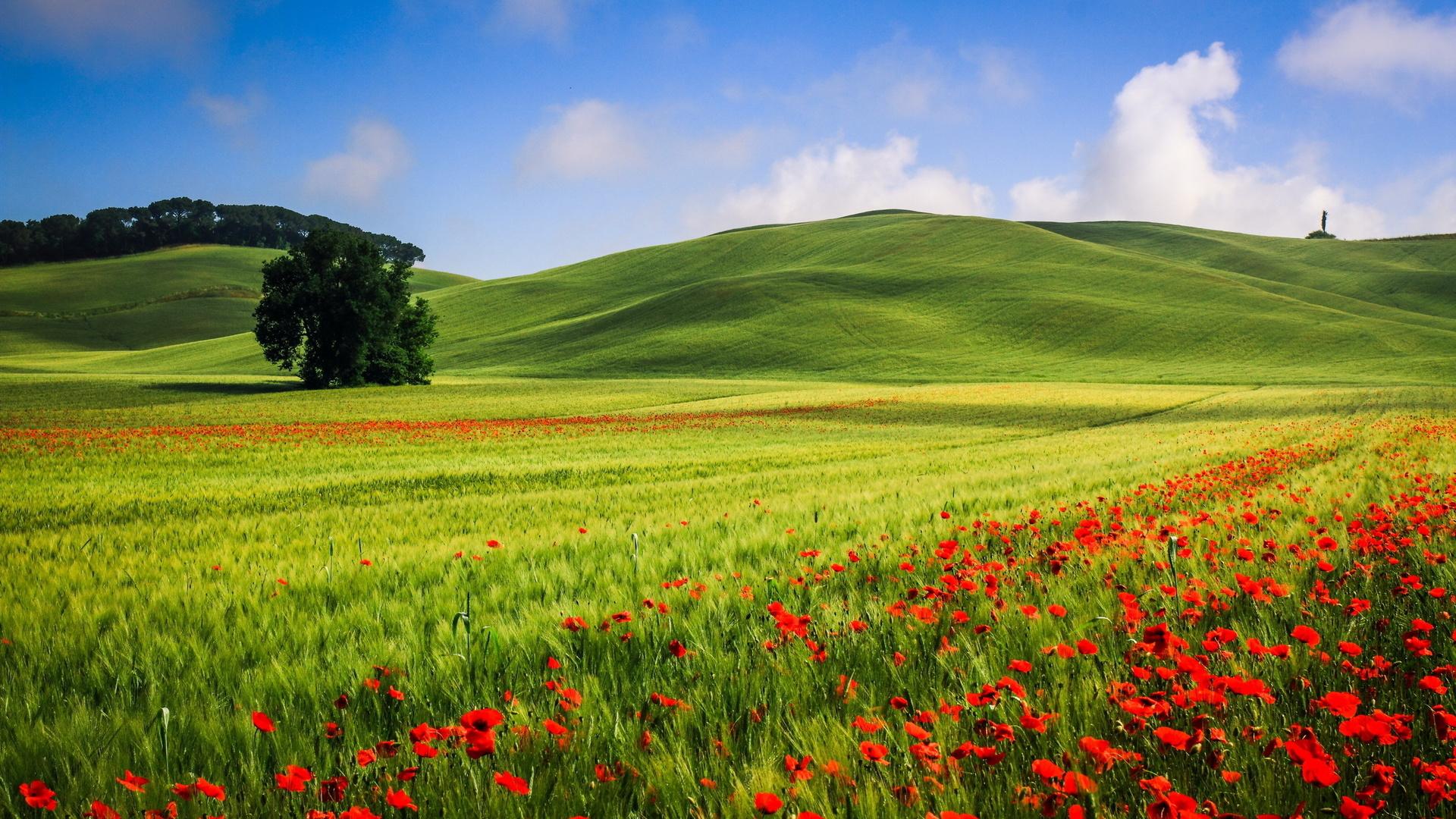 Картинки поля красивые большого разрешения