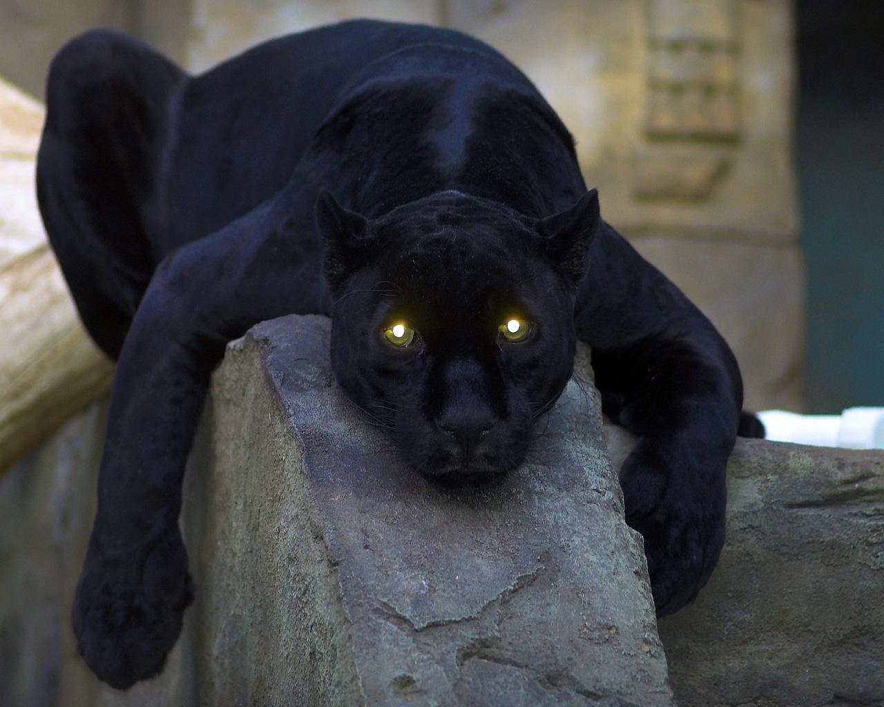 картинки черная пантера прикольные этом, для устранения