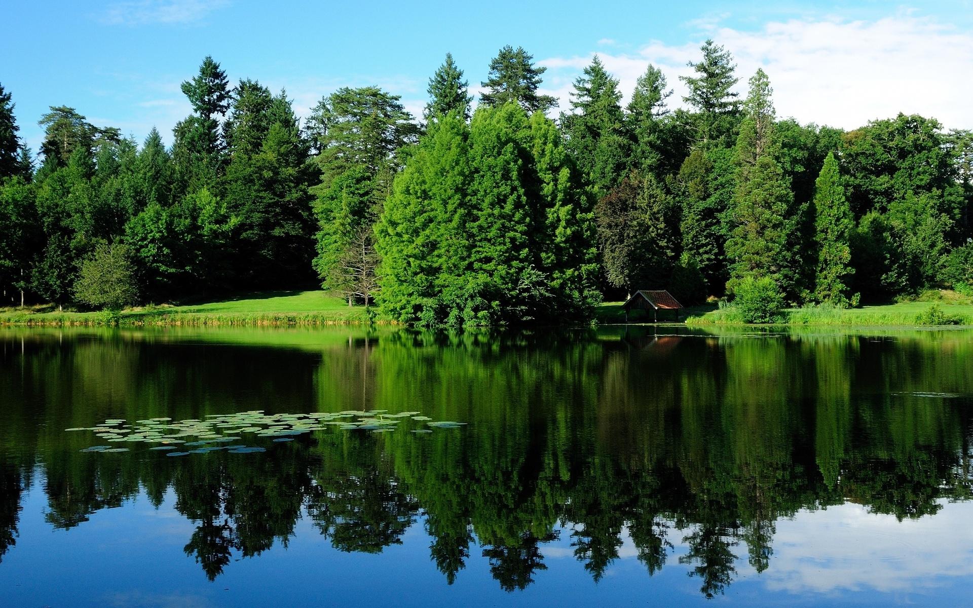 красивые картинки озеро лес немного