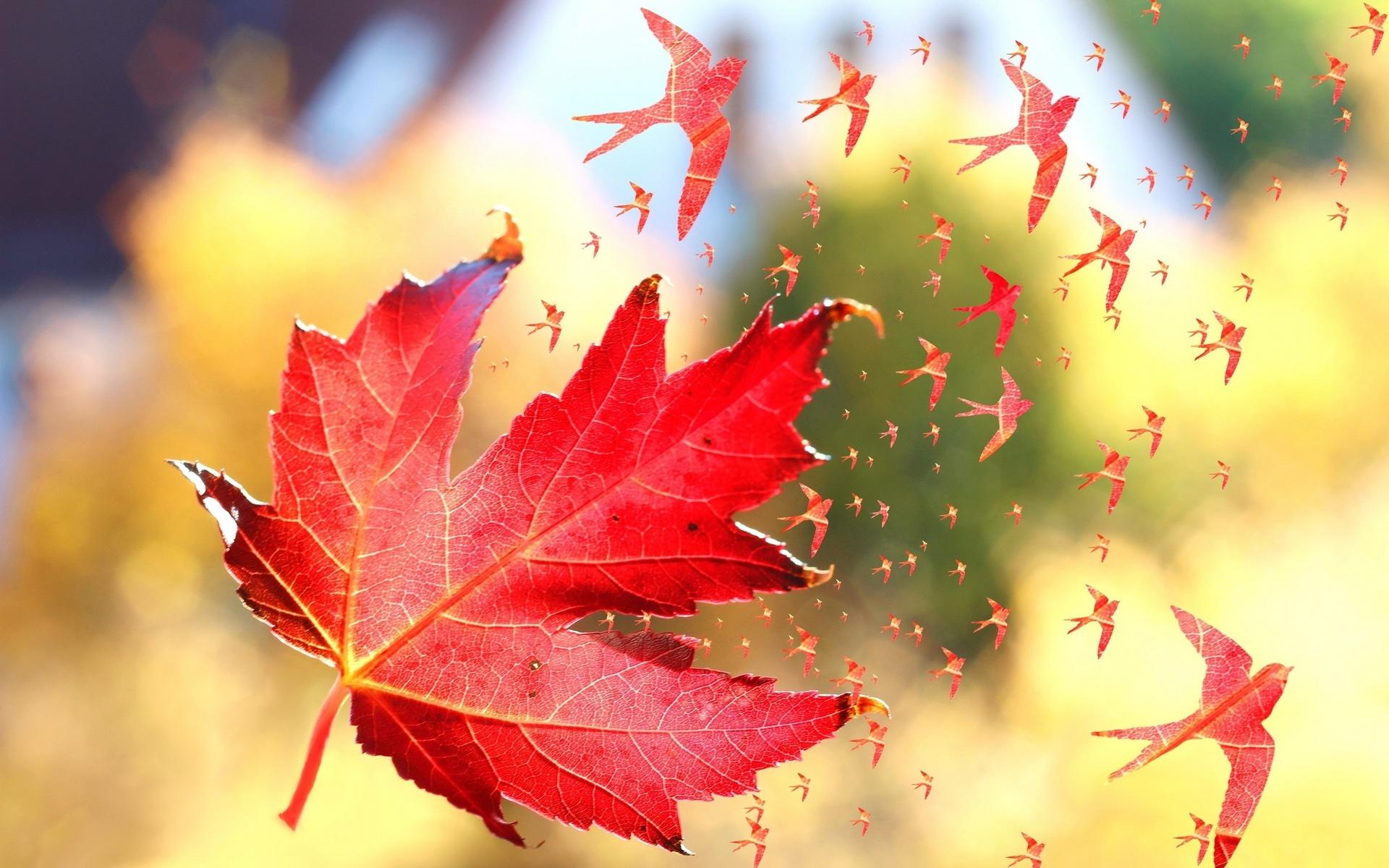 колясок картинка улетающие листья момент