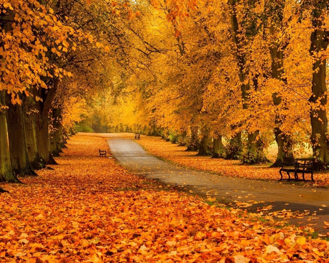 очень красивые картинки про осень москве очень много