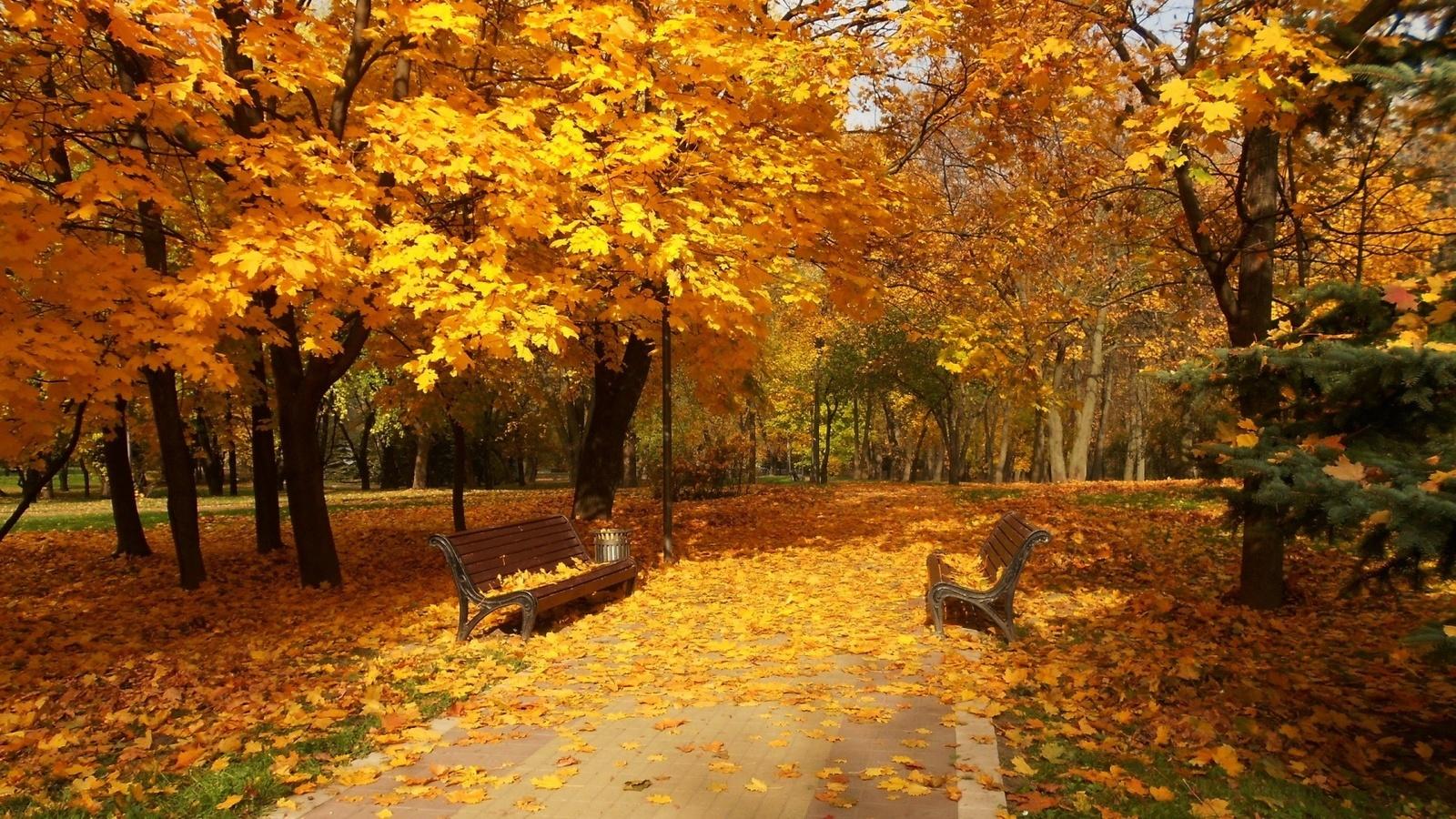 Показать картинки осень золотая сих