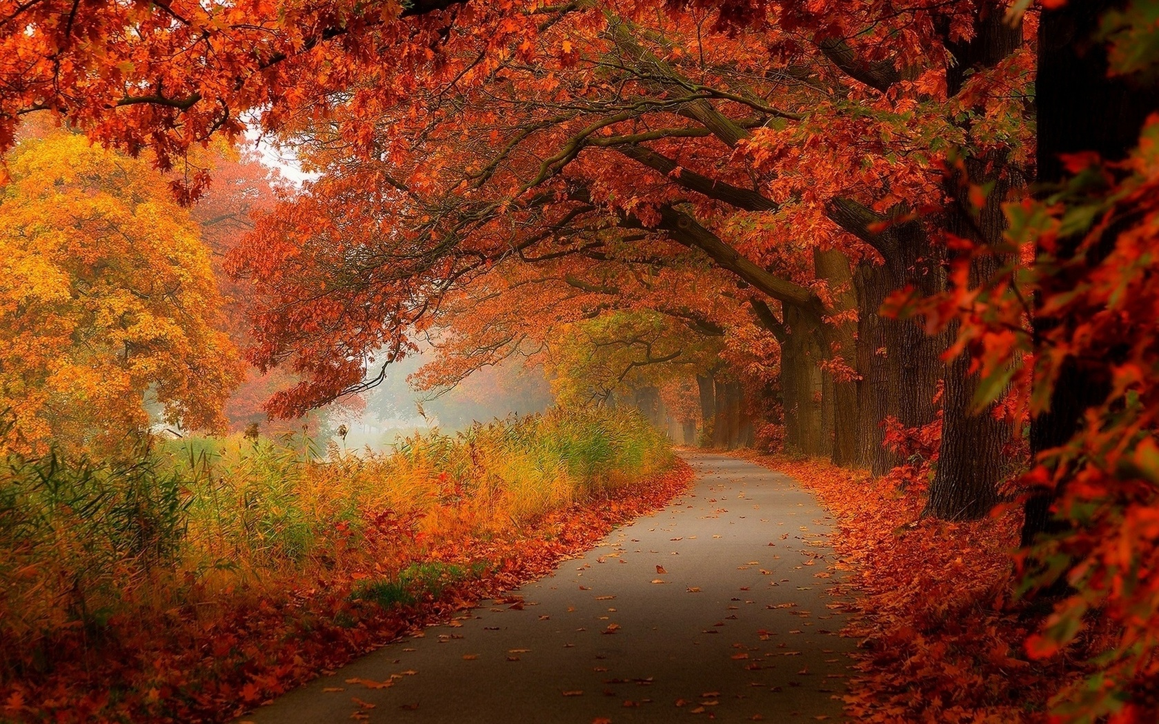 Красивые картинки осень в контакте