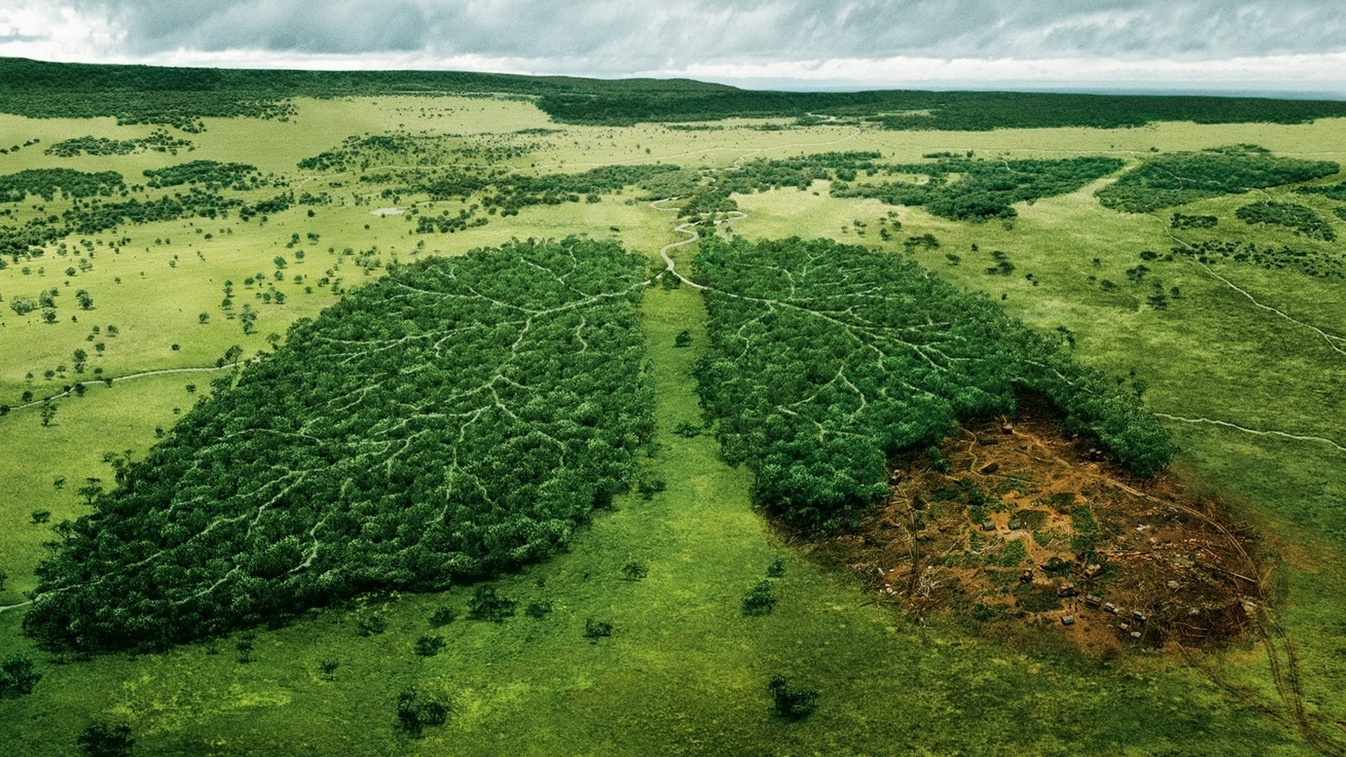 Картинки вырубка лесов экологическая проблема