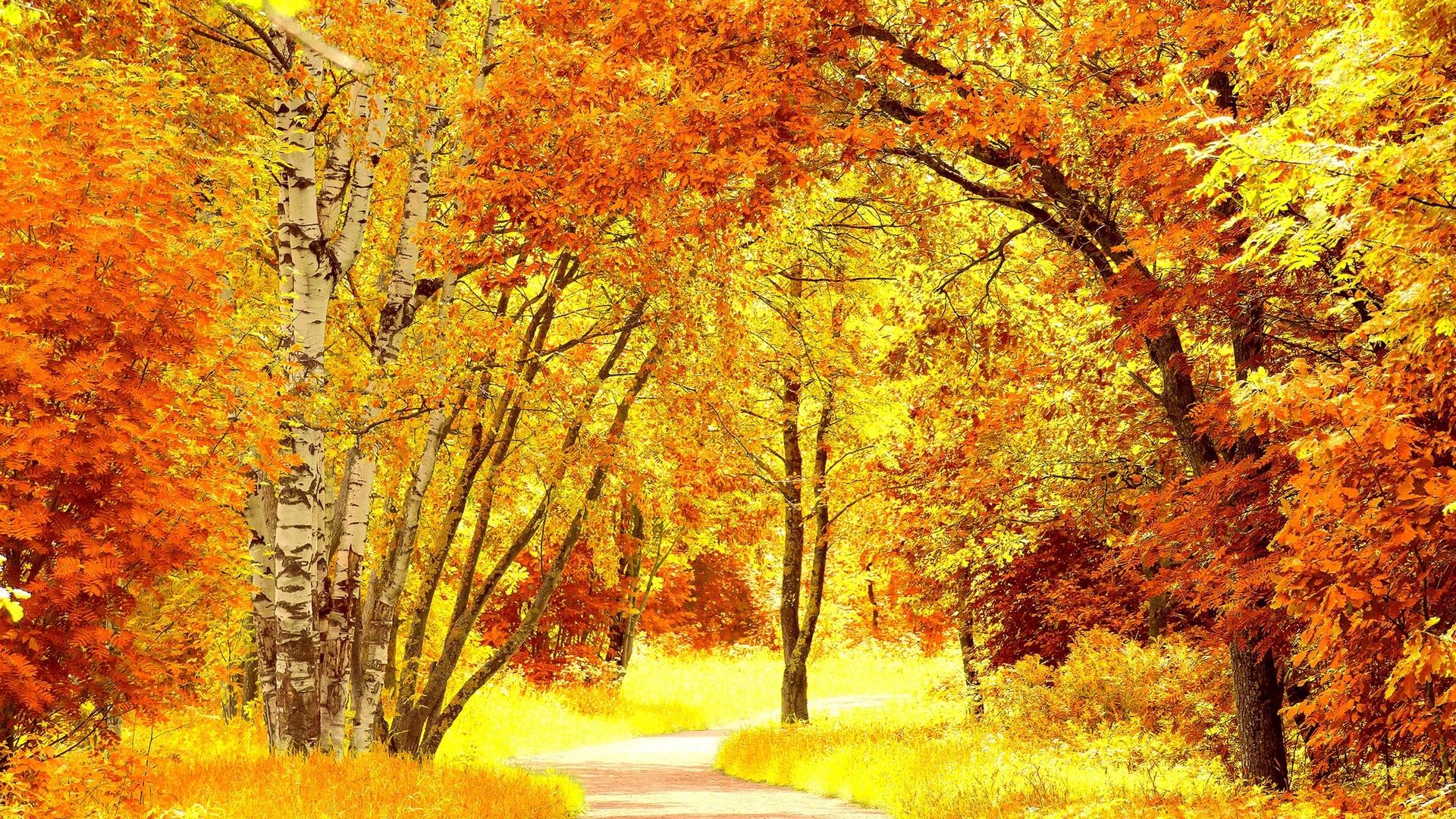 Открытка осень в лесу