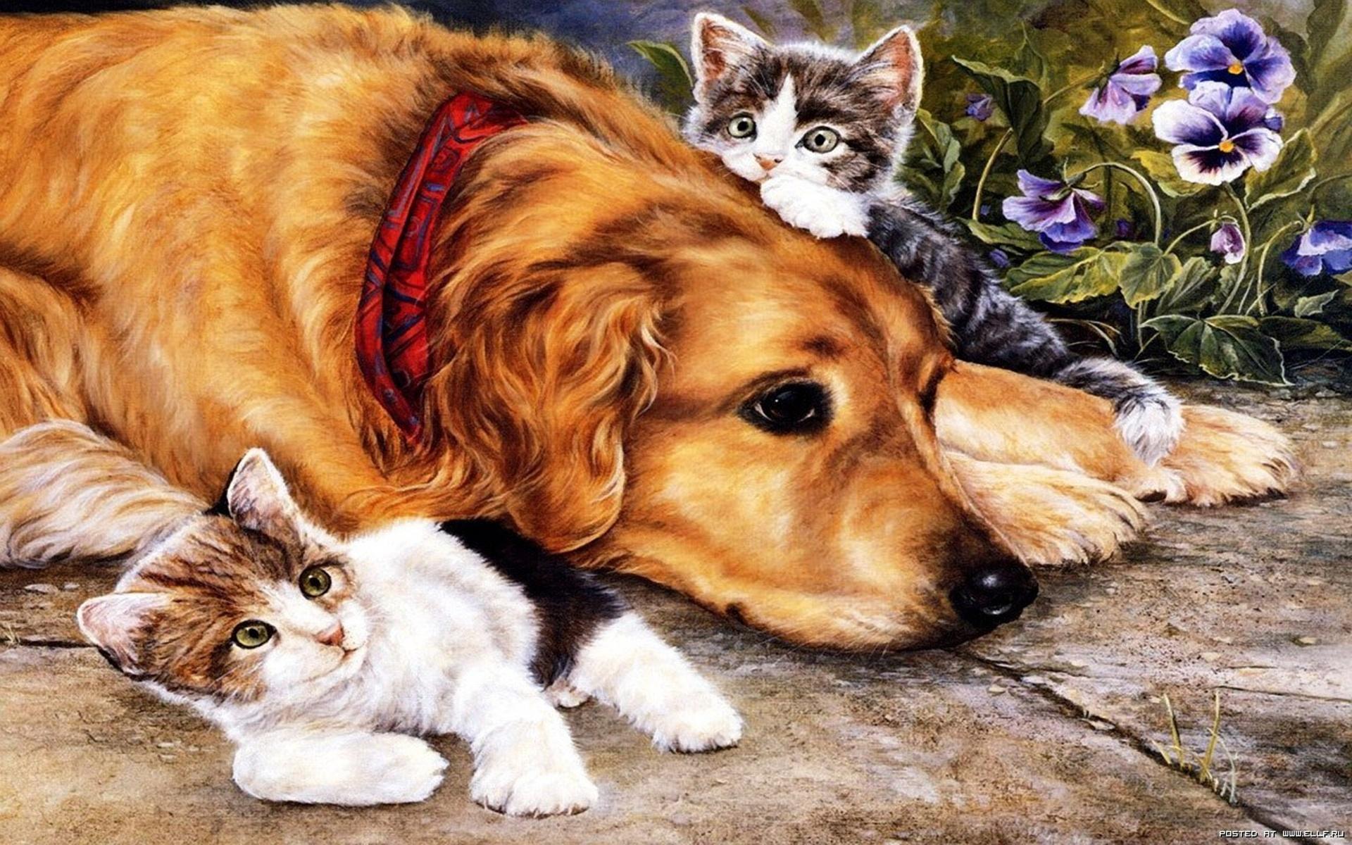 Картинки на тему собаки и кошки