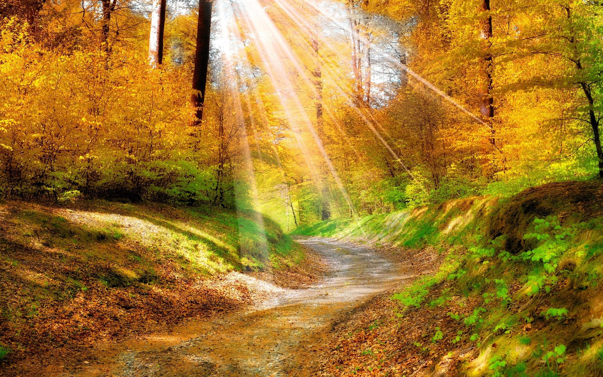 жили красивые картинки леса осеннего продуктивным