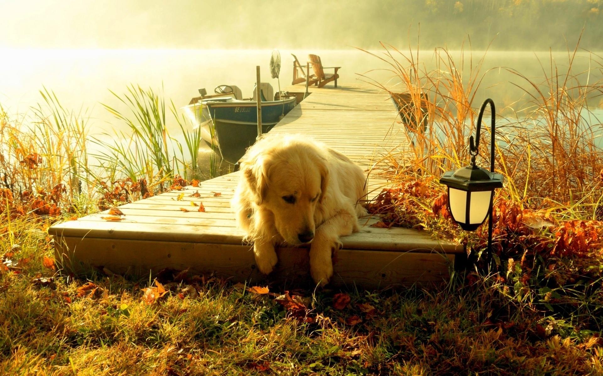 Картинки с добрым утром природа и животные