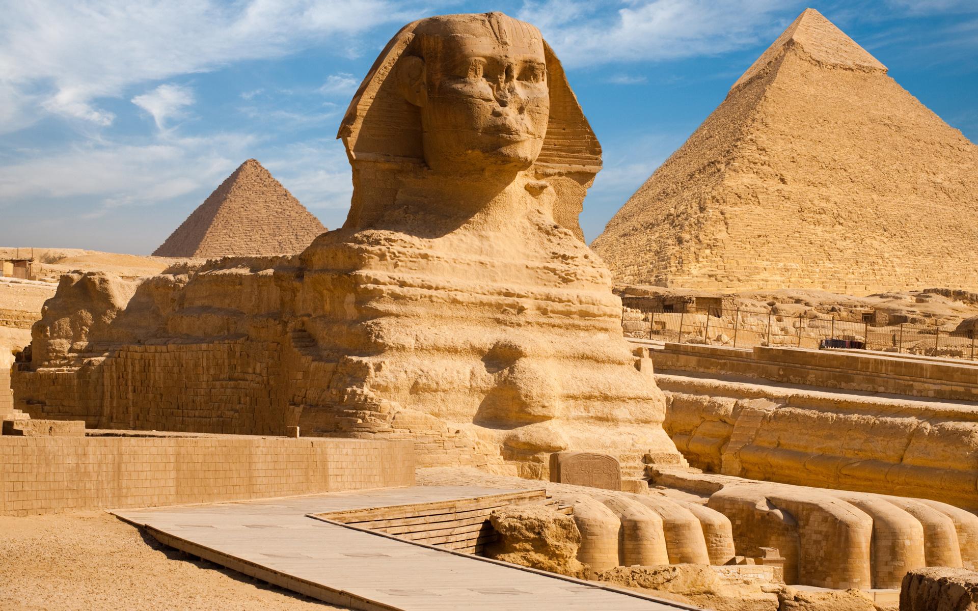 решили египетские сфинксы фото этот сорт