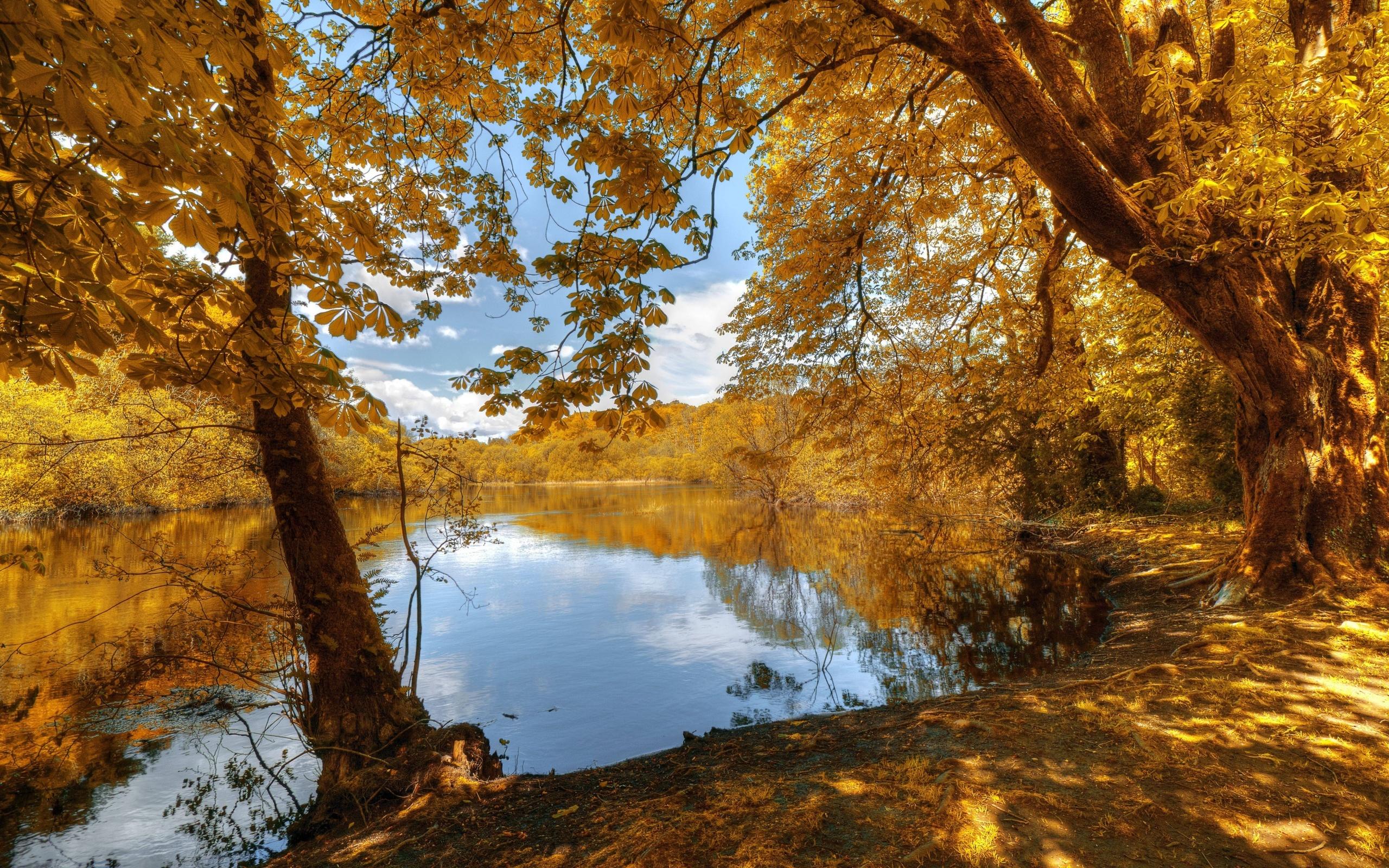 раскраски осенние пейзажи картинки смотреть судя высоте деревянного