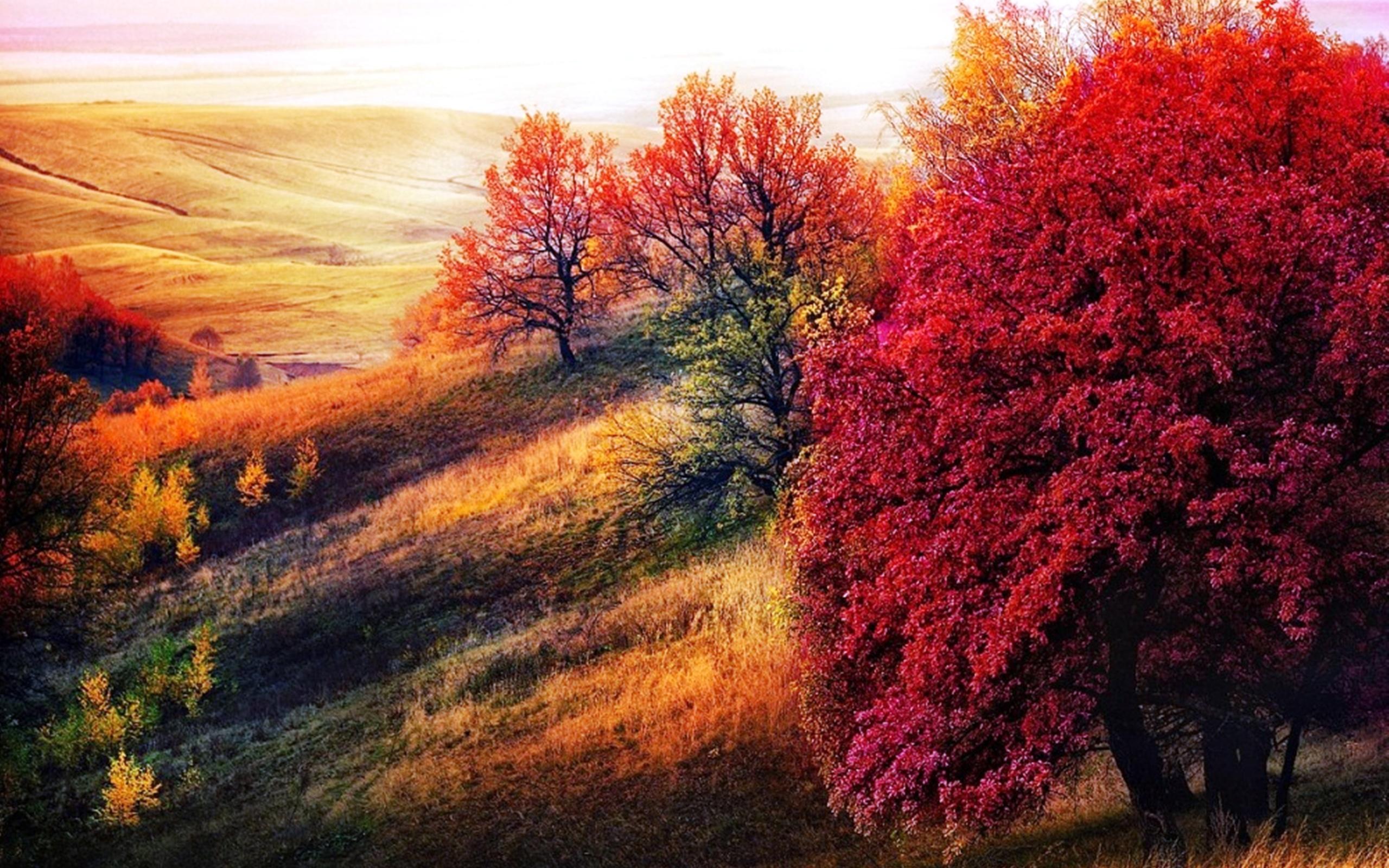 пугайтесь картинки золотая осень красивые необычные кто