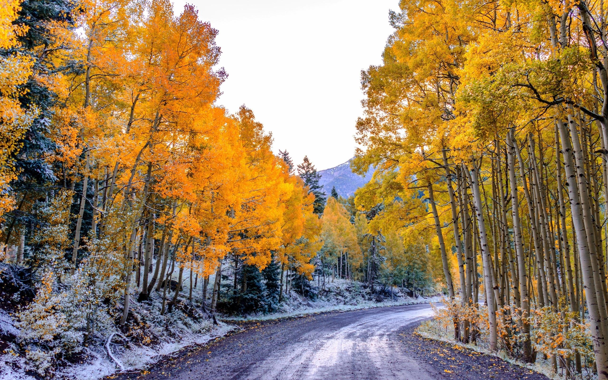 Природа в ноябре картинки