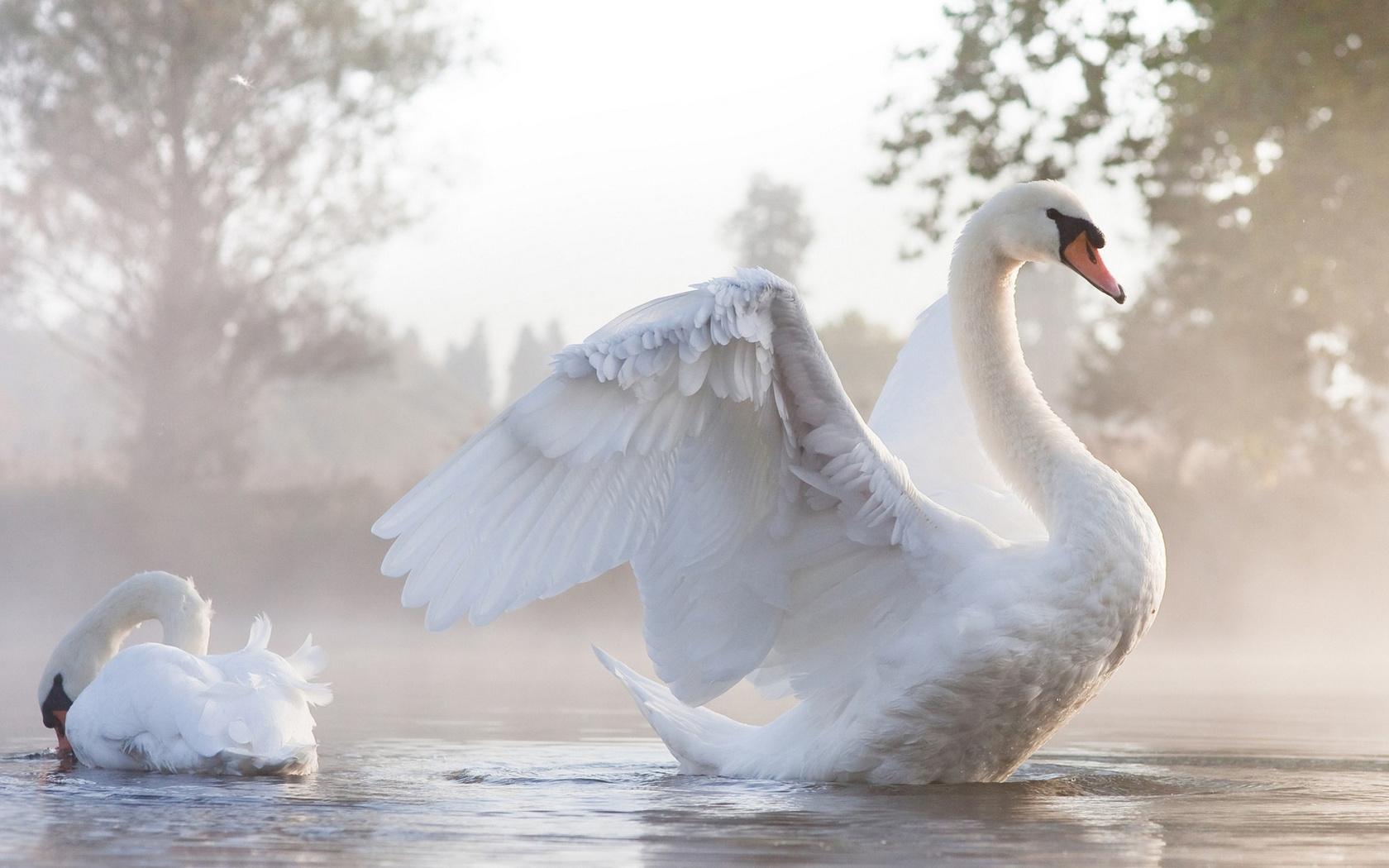 кормлении белая птица любви картинки идеально впишется дорогую