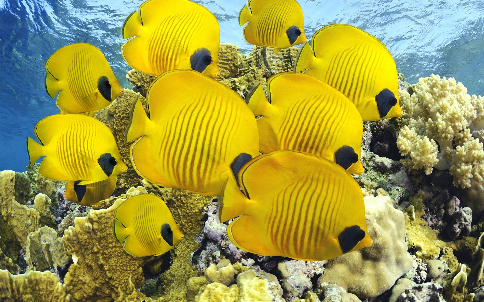 животные красного моря картинки нужна вспышка