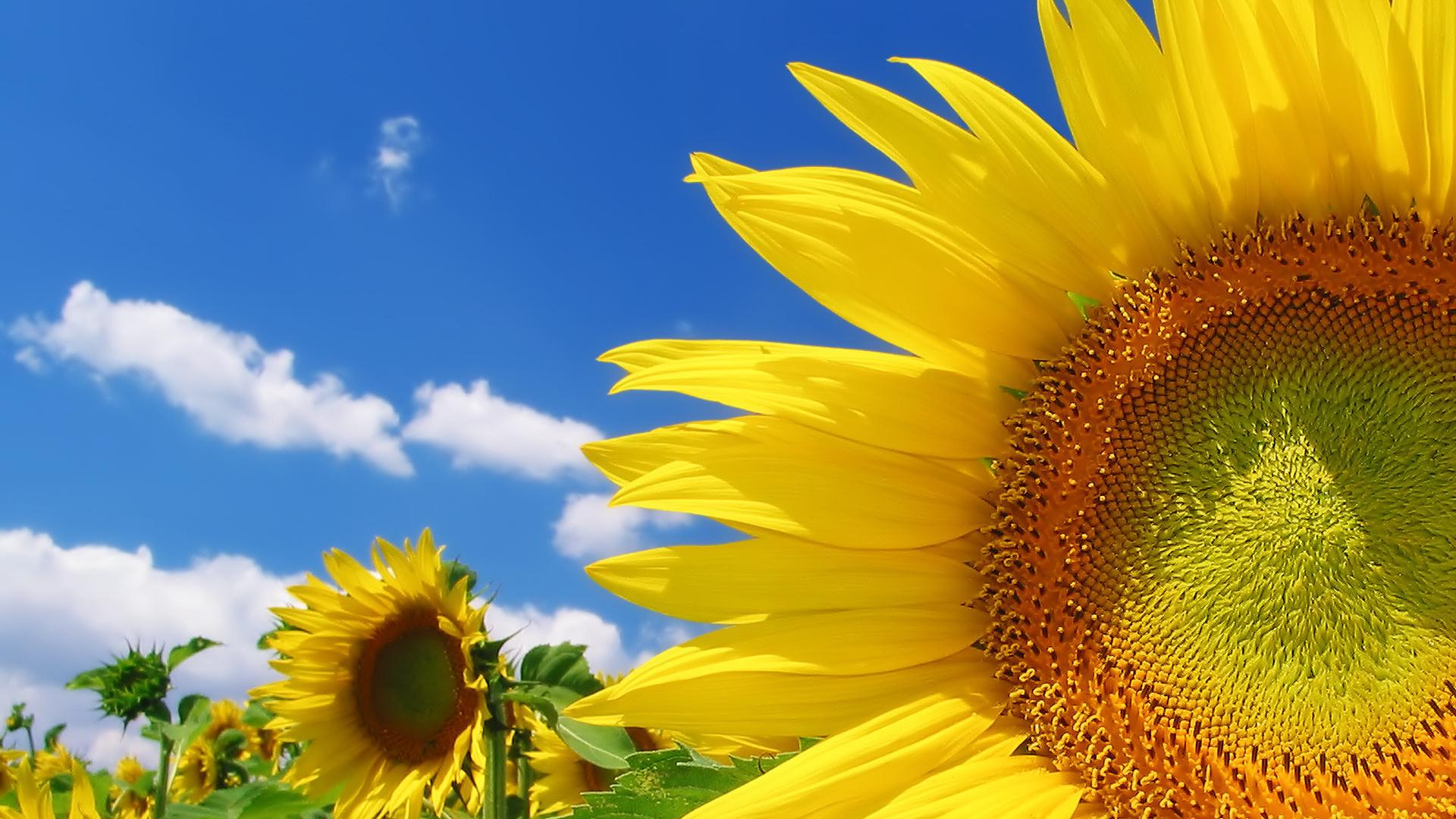 Открытки солнца красивые