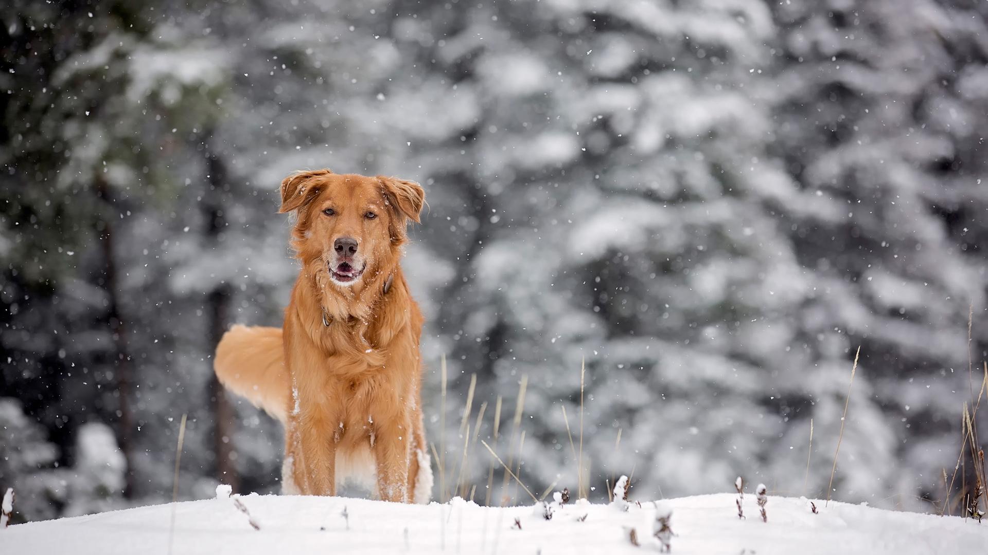 записывает фотки собачки в снегу помню как
