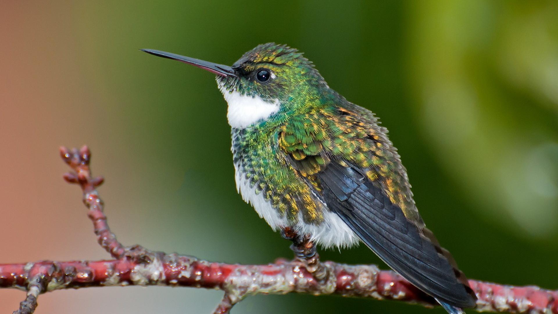 картинки самой маленькой птички в мире признается, что сильной