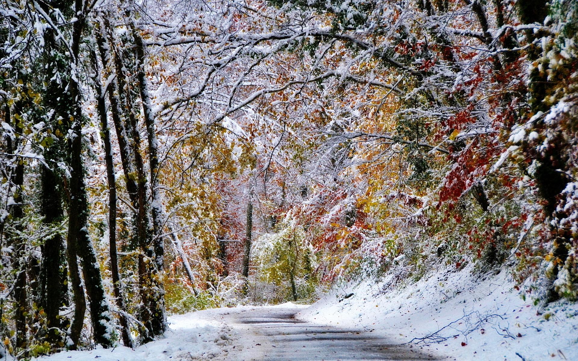 Ноябрьский снег картинки