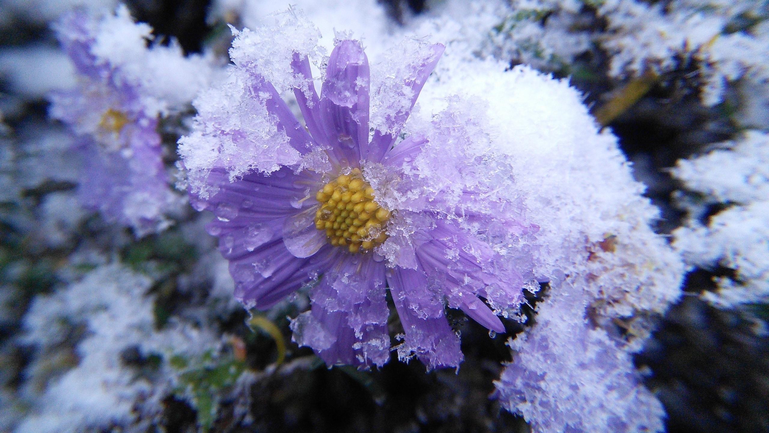 картинки ноябрь цветы показывать смешное кино