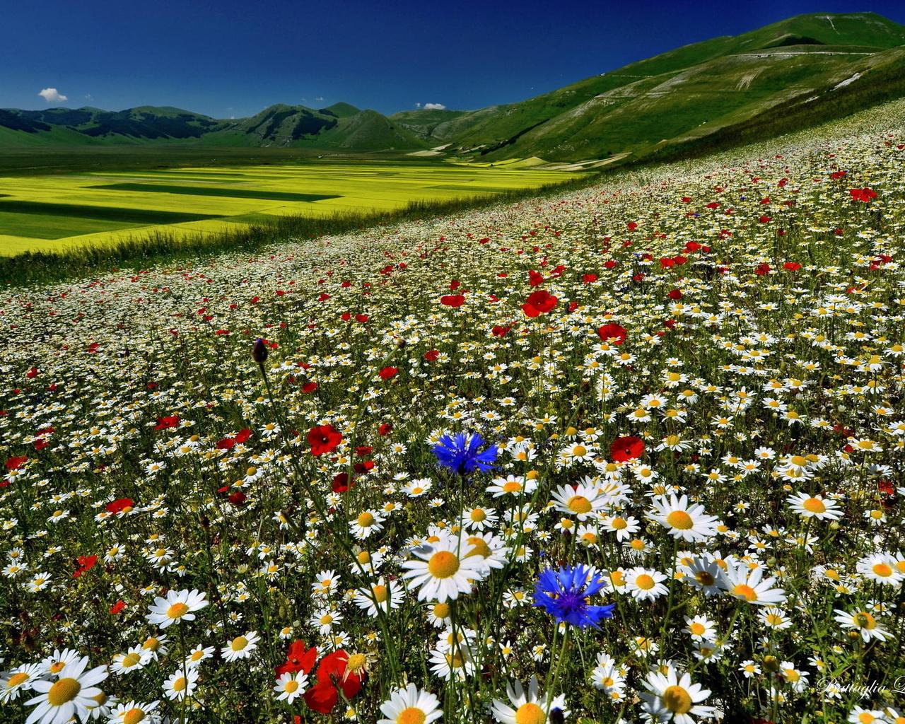 картинка поле цветов и горы подарков славится только