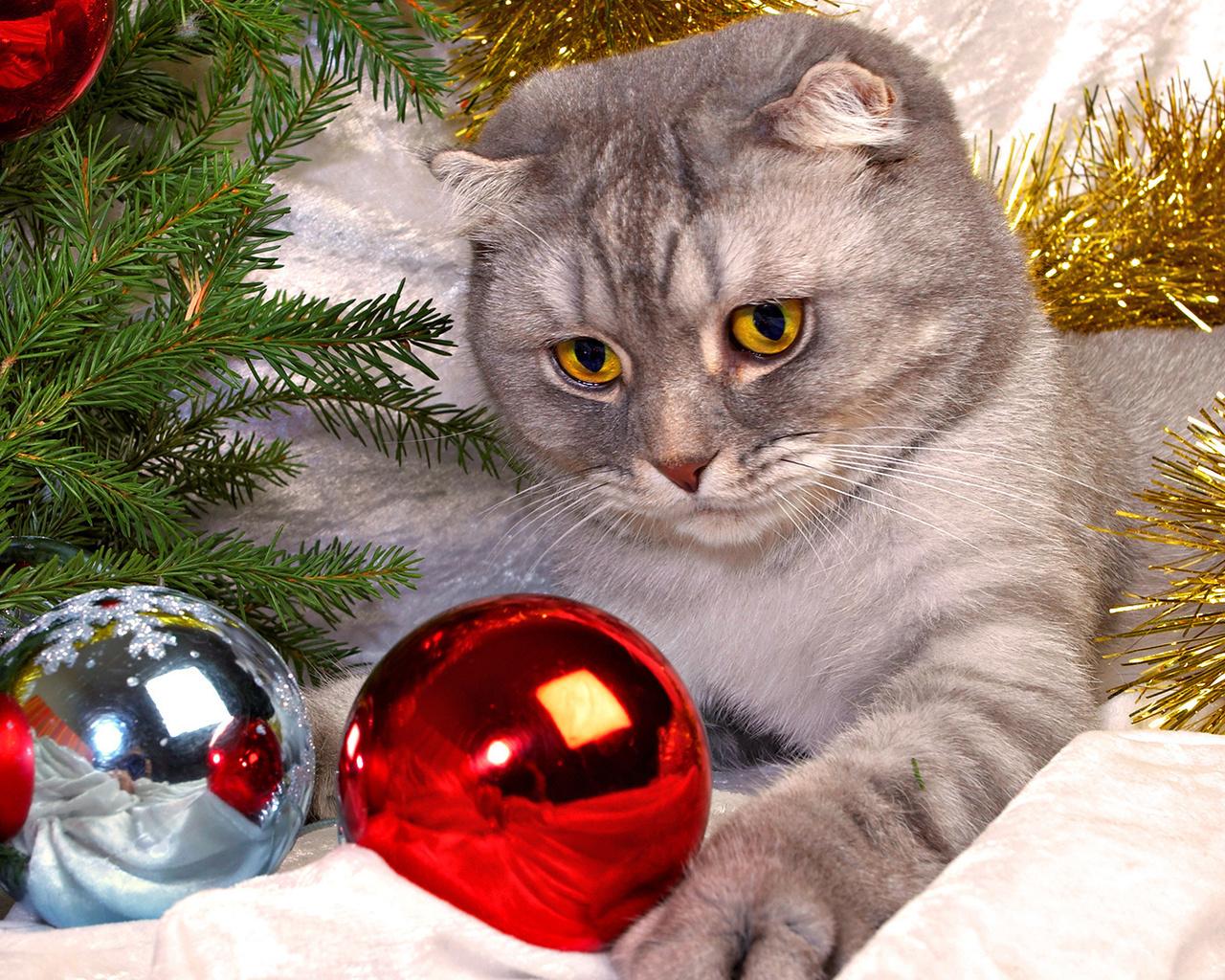 Картинка с новогодним котом
