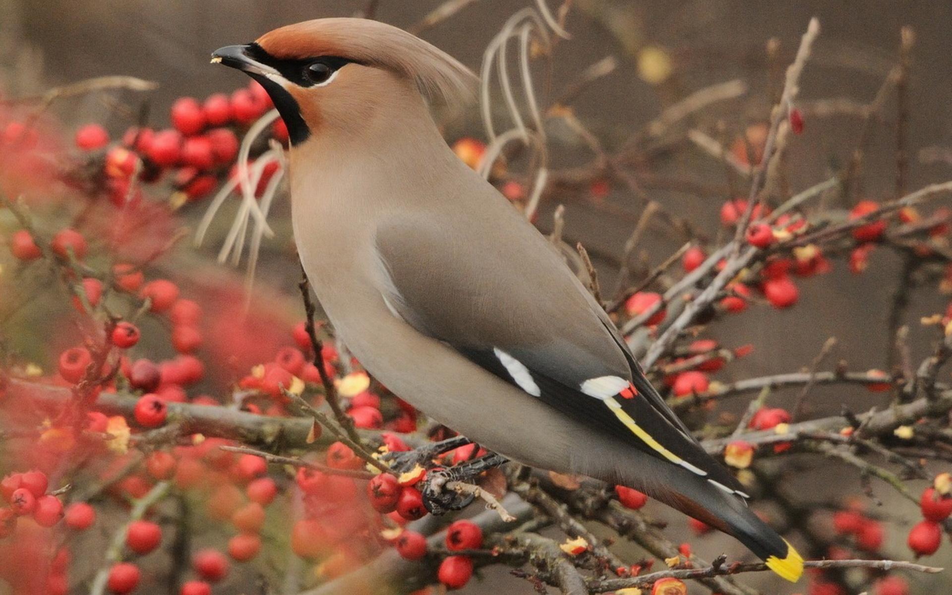 коллекция неповторимых картинки все о птичках пусть