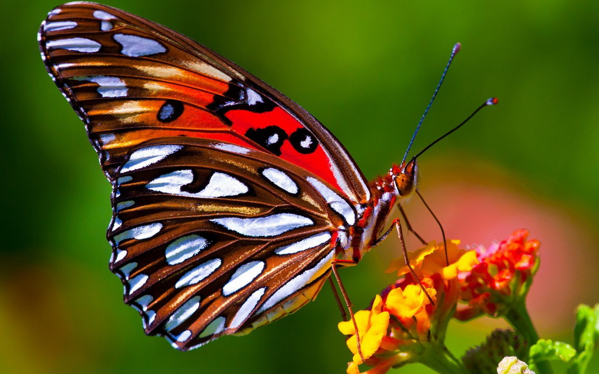 Посмотреть картинки с бабочками