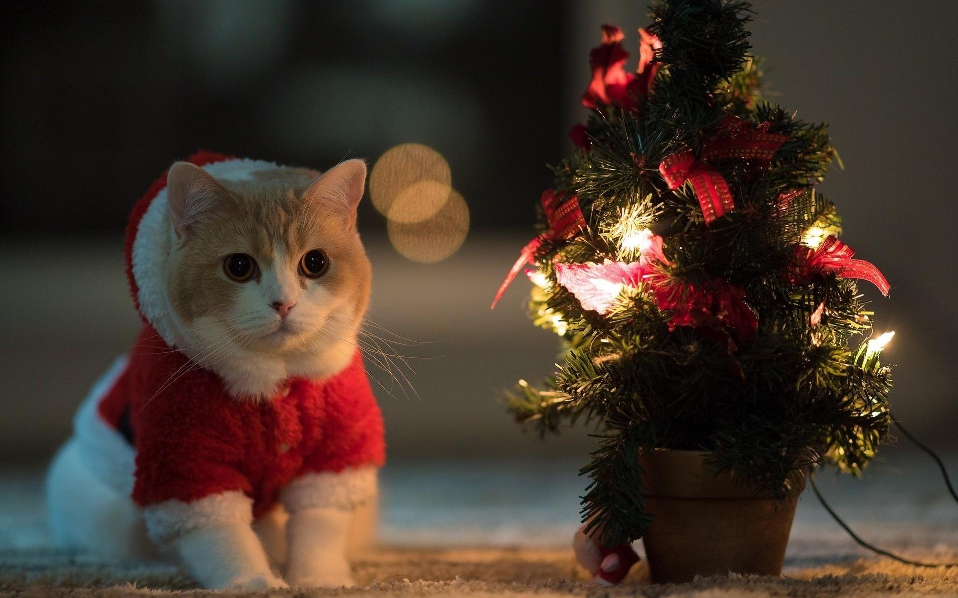 отменный атрибут новогодние картинки с кошками природный комплекс множеством