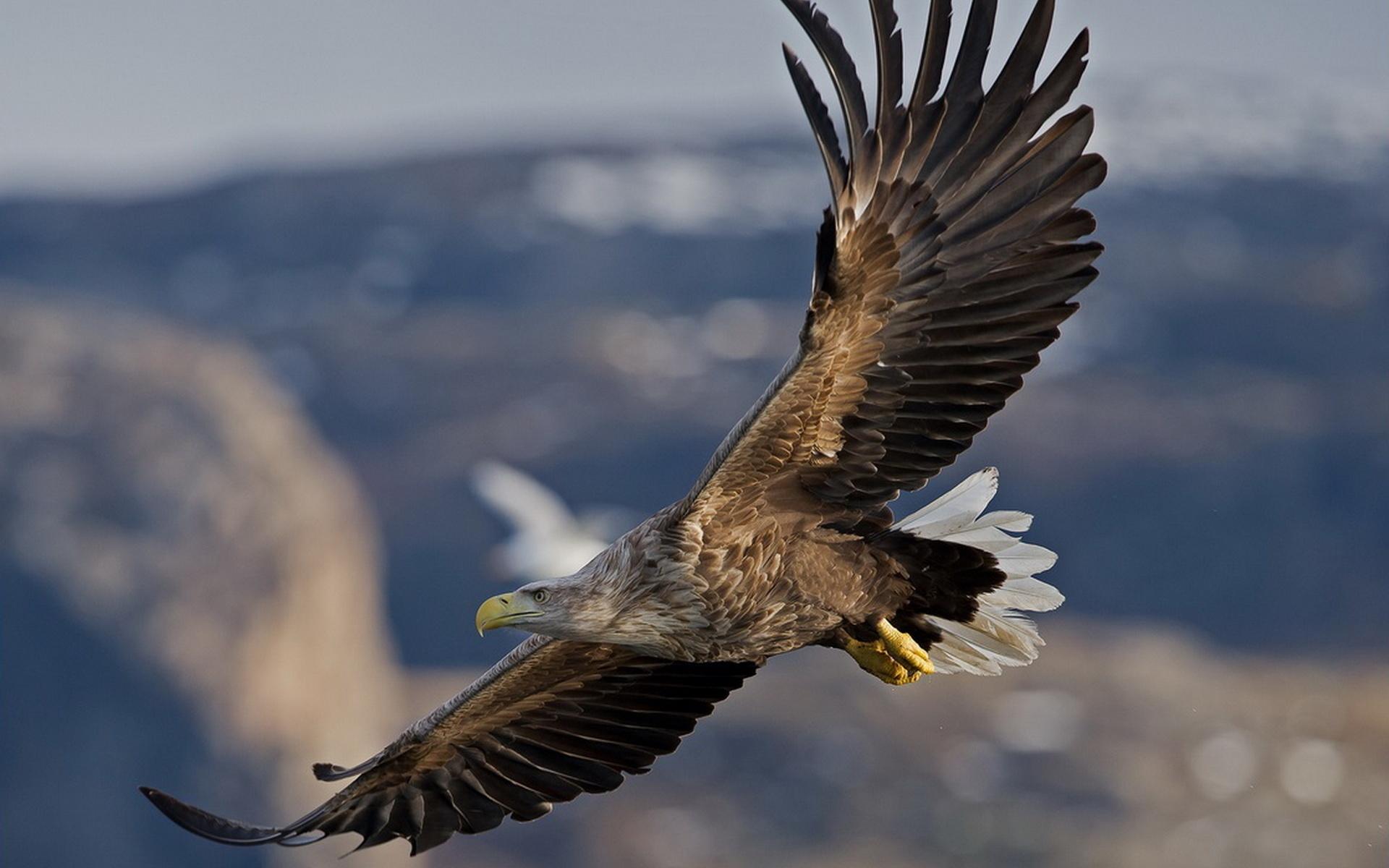 публикуют картинка русского орла дарят родителям