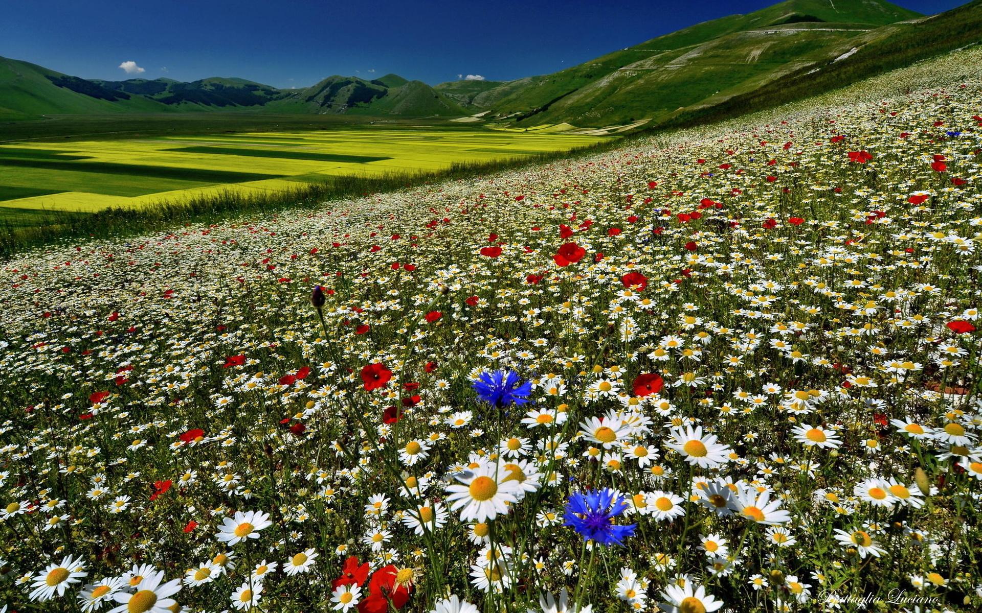 если красивые картинки полей с цветами лучше