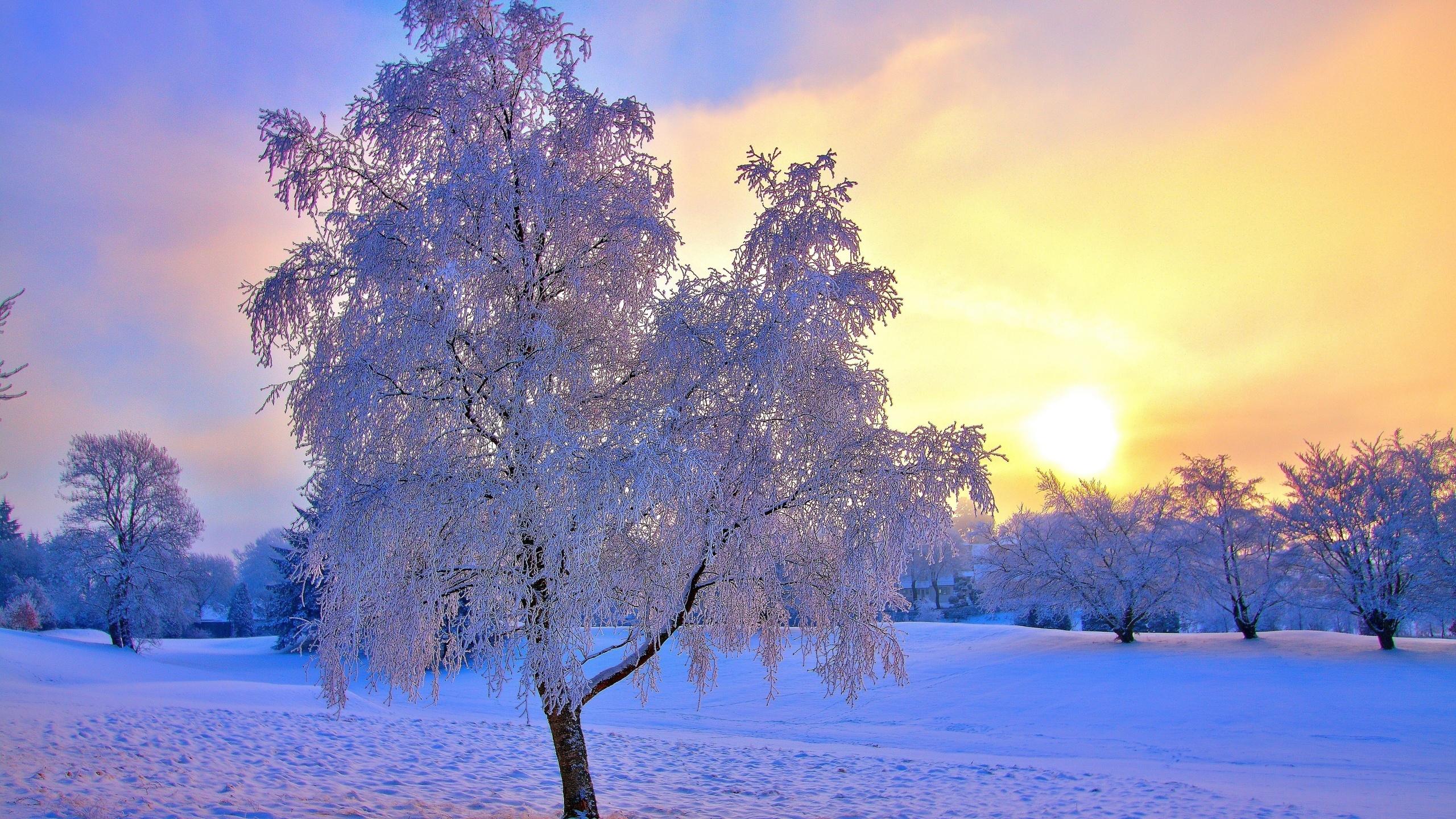 Красивый картинка зима