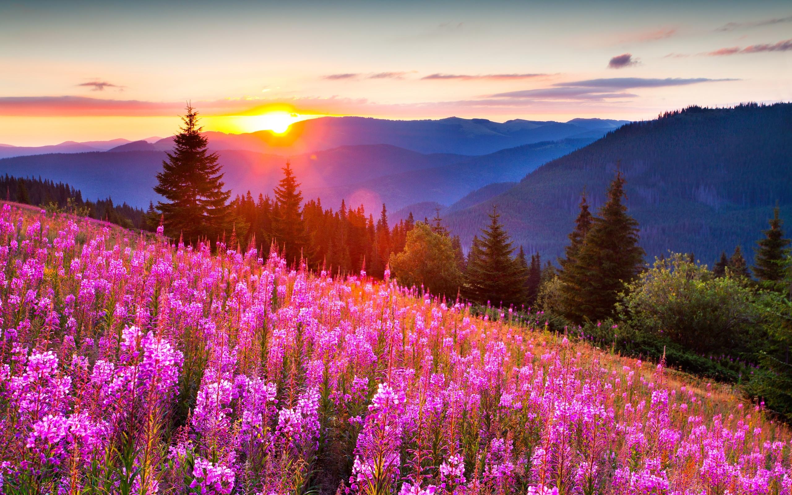 Летние самые красивые картинки