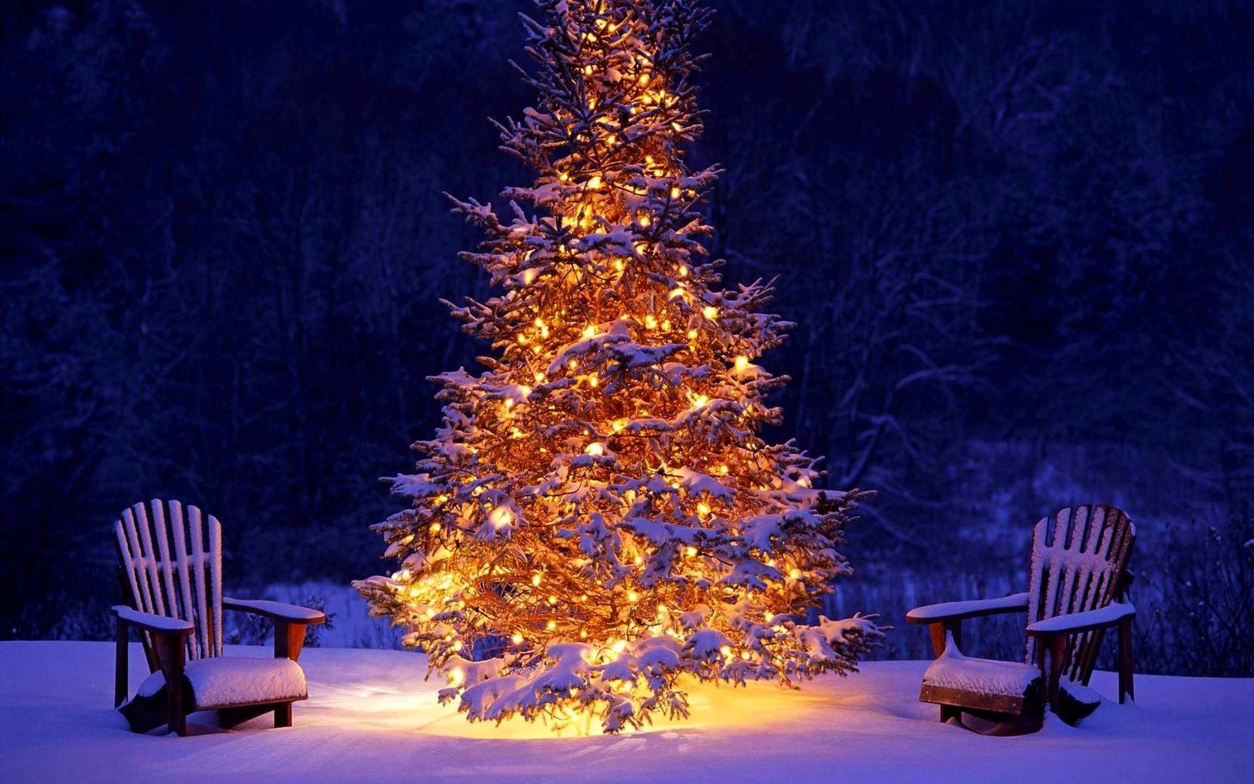 Зимняя картинка новогодняя лес