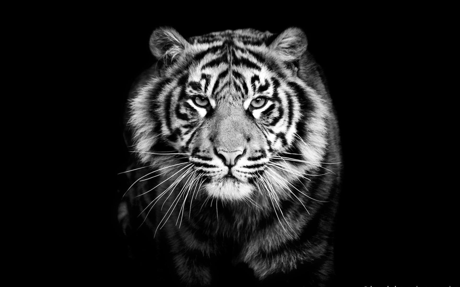 Картинки животные на темном фоне