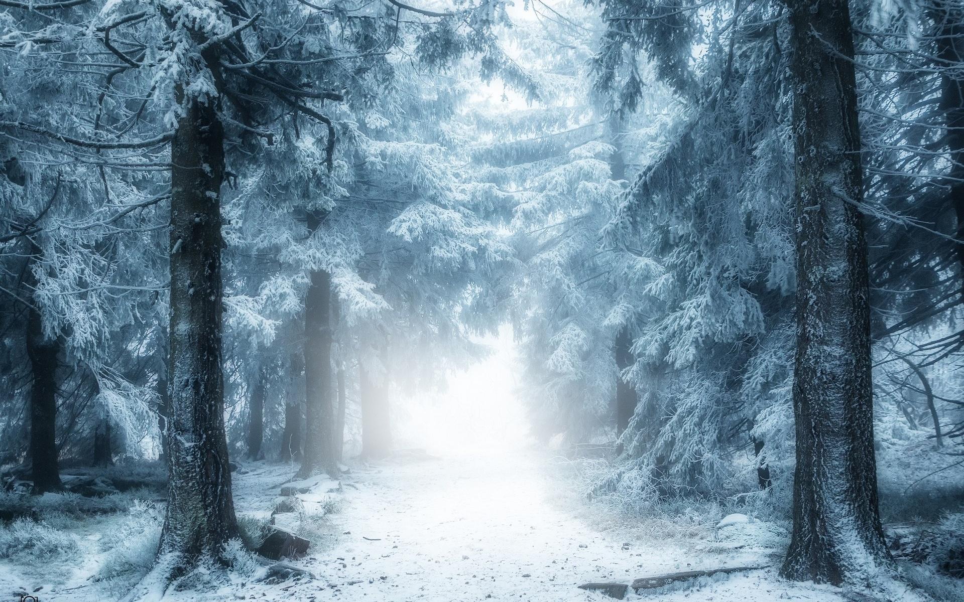 ива лес зимой и сказка фэнтези фото обладает необъяснимым магнетизмом