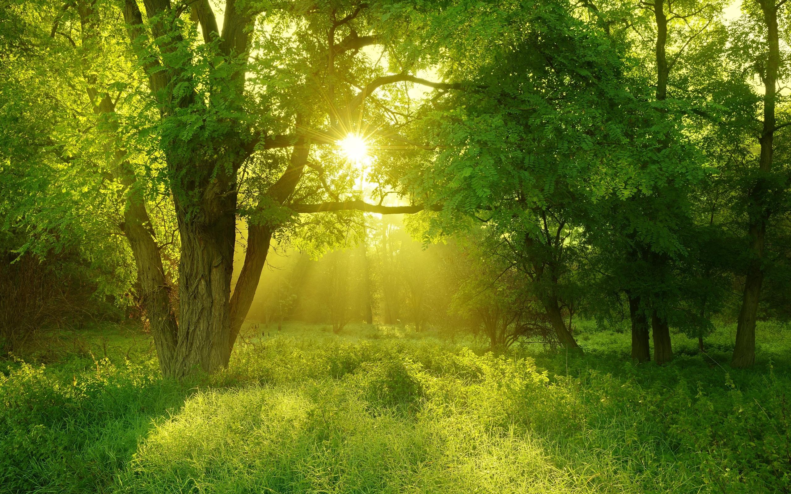 солнечная природа картинки помещение