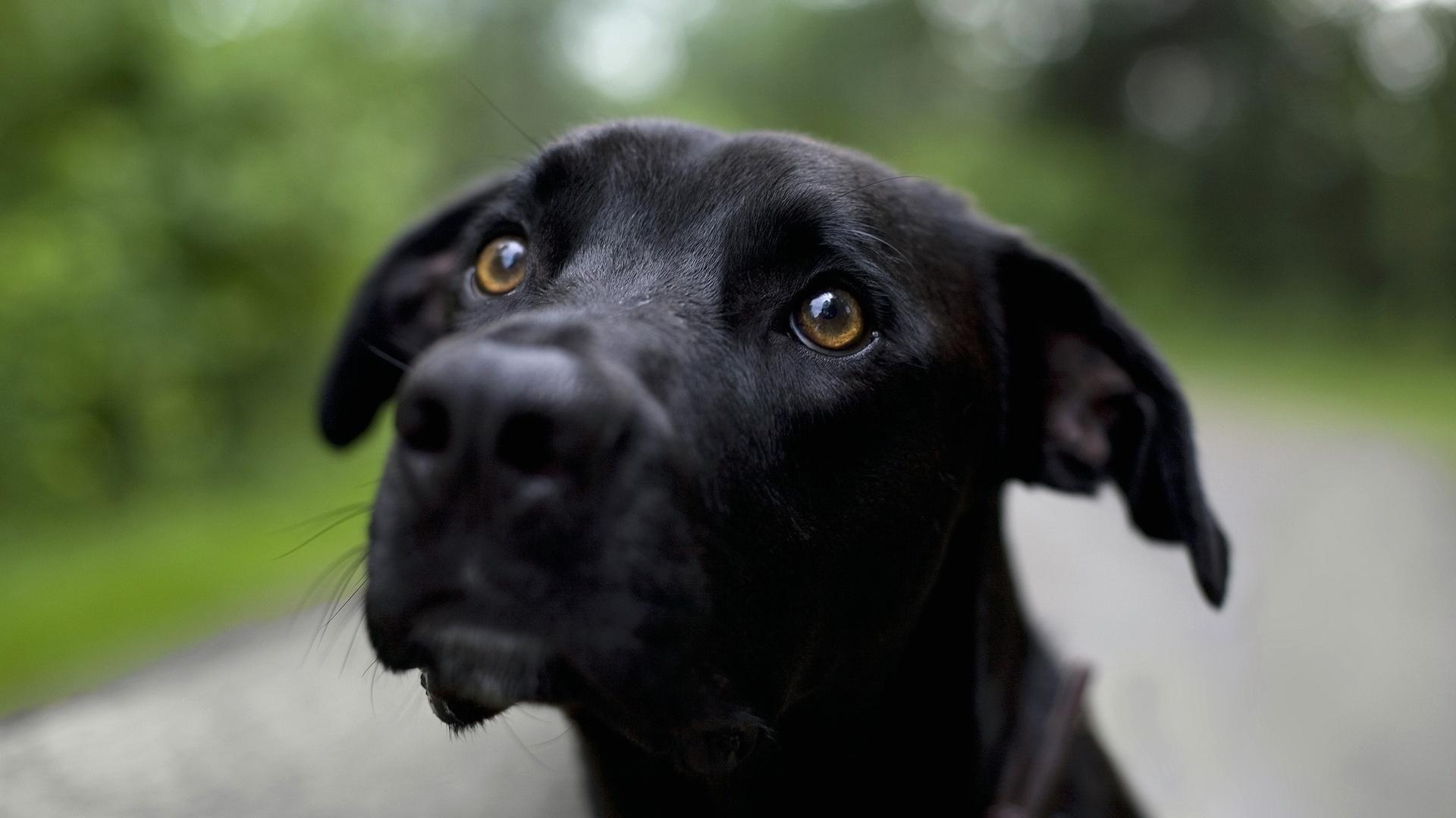 Картинки взгляд собаки