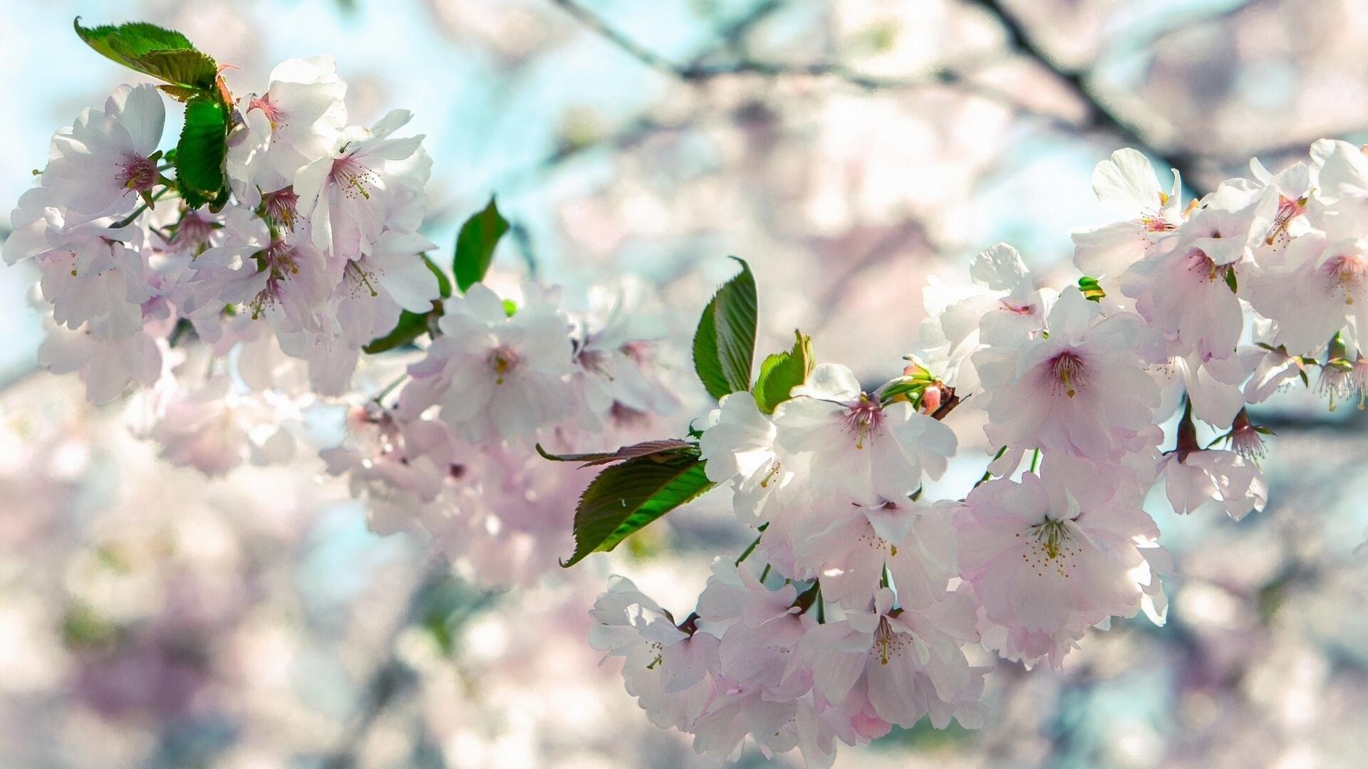 Красивая открытка природы солнце весна, открытках