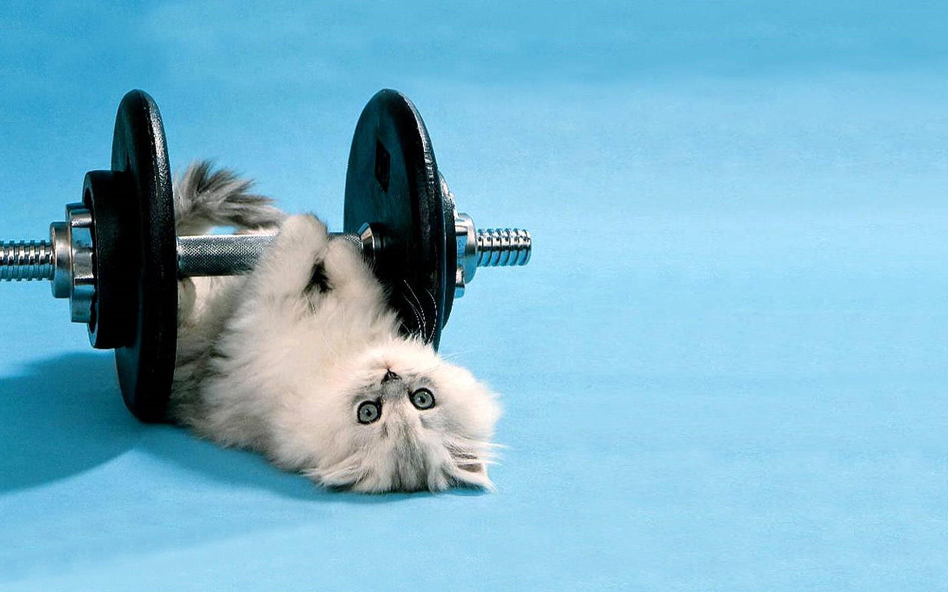 цитаты картинки кот лежит и занимается спортом этом