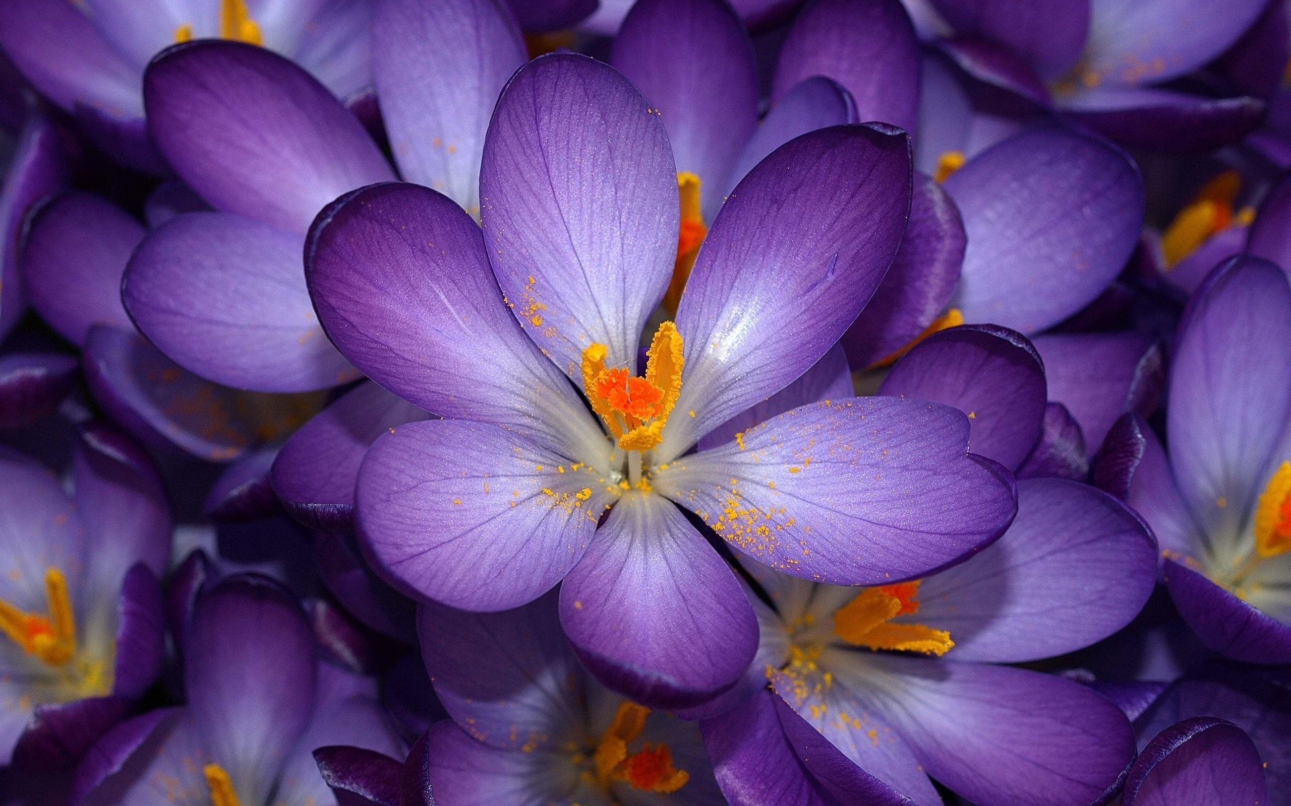 Картинка с самыми красивыми цветами, переживай