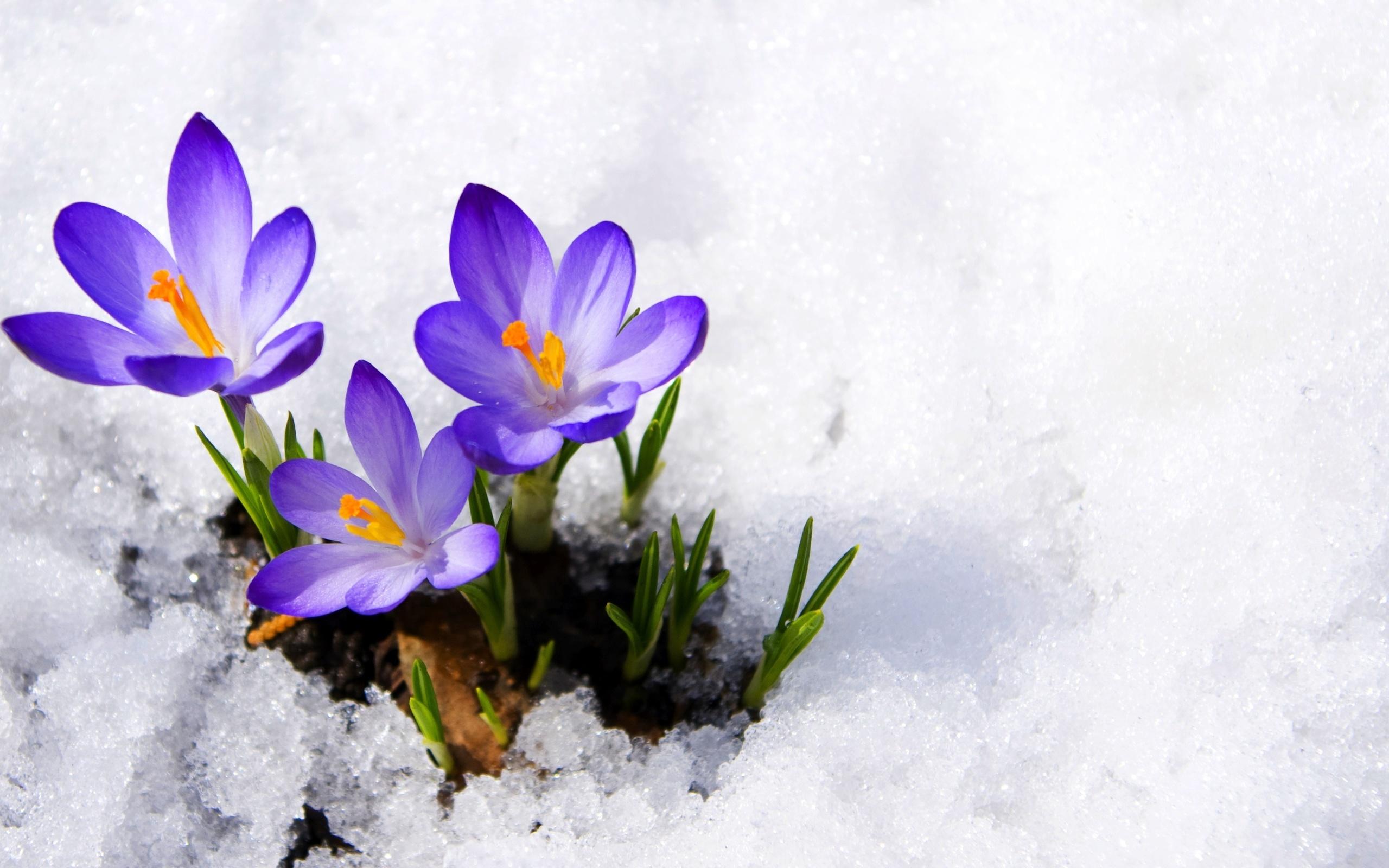 вся картинки на весь экран цветы под снегом графике
