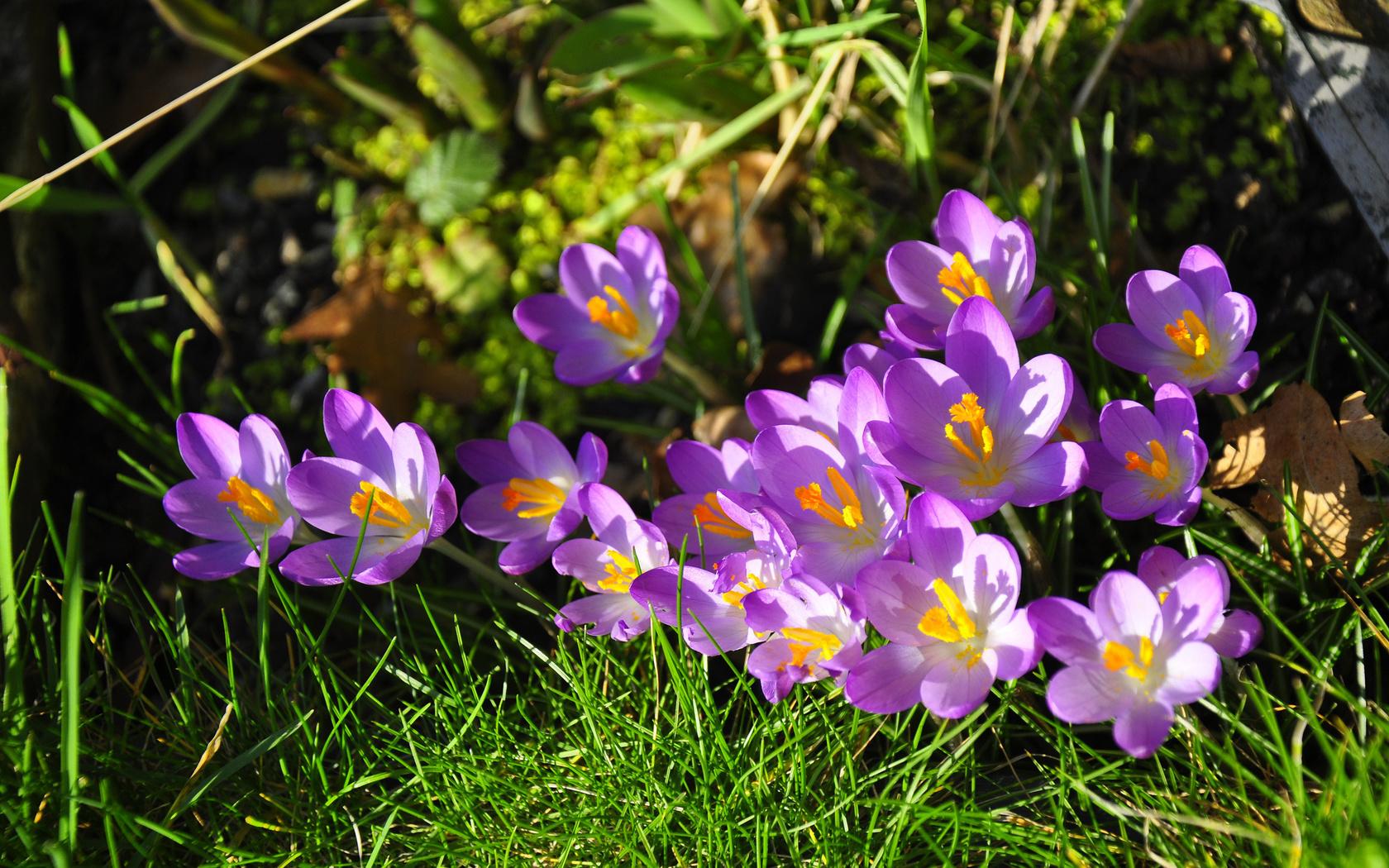 Обои картинки фото весны цветы весенние