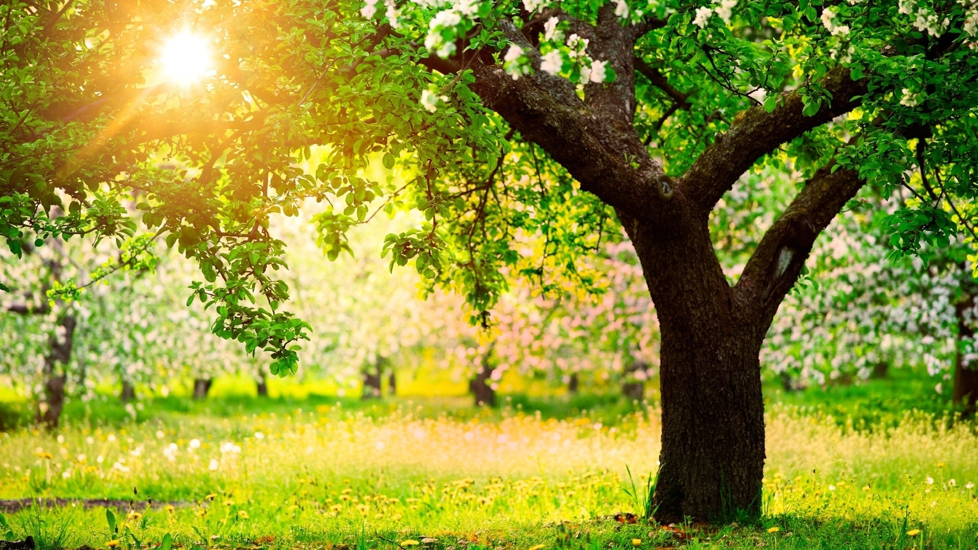Картинки с деревьями весна
