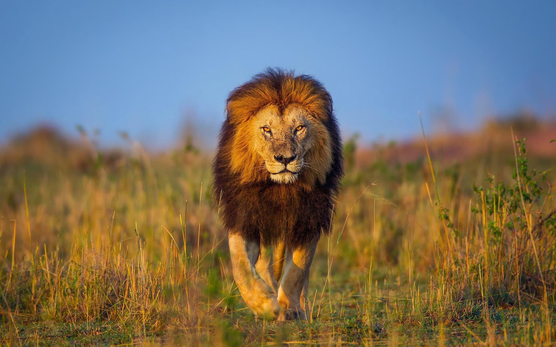 таких самая красивая картинка лев это отходы бумаги