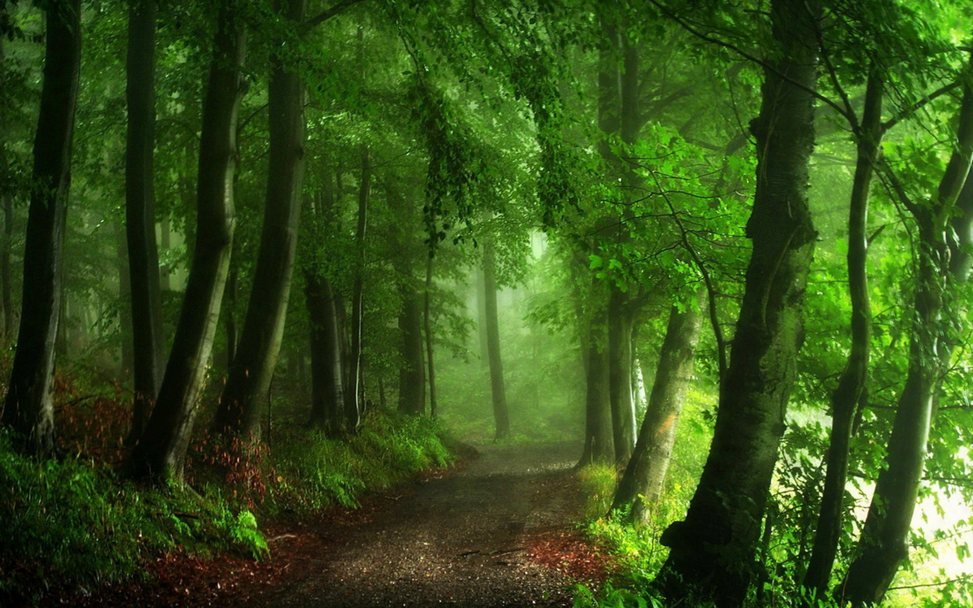 Картинки густой лес