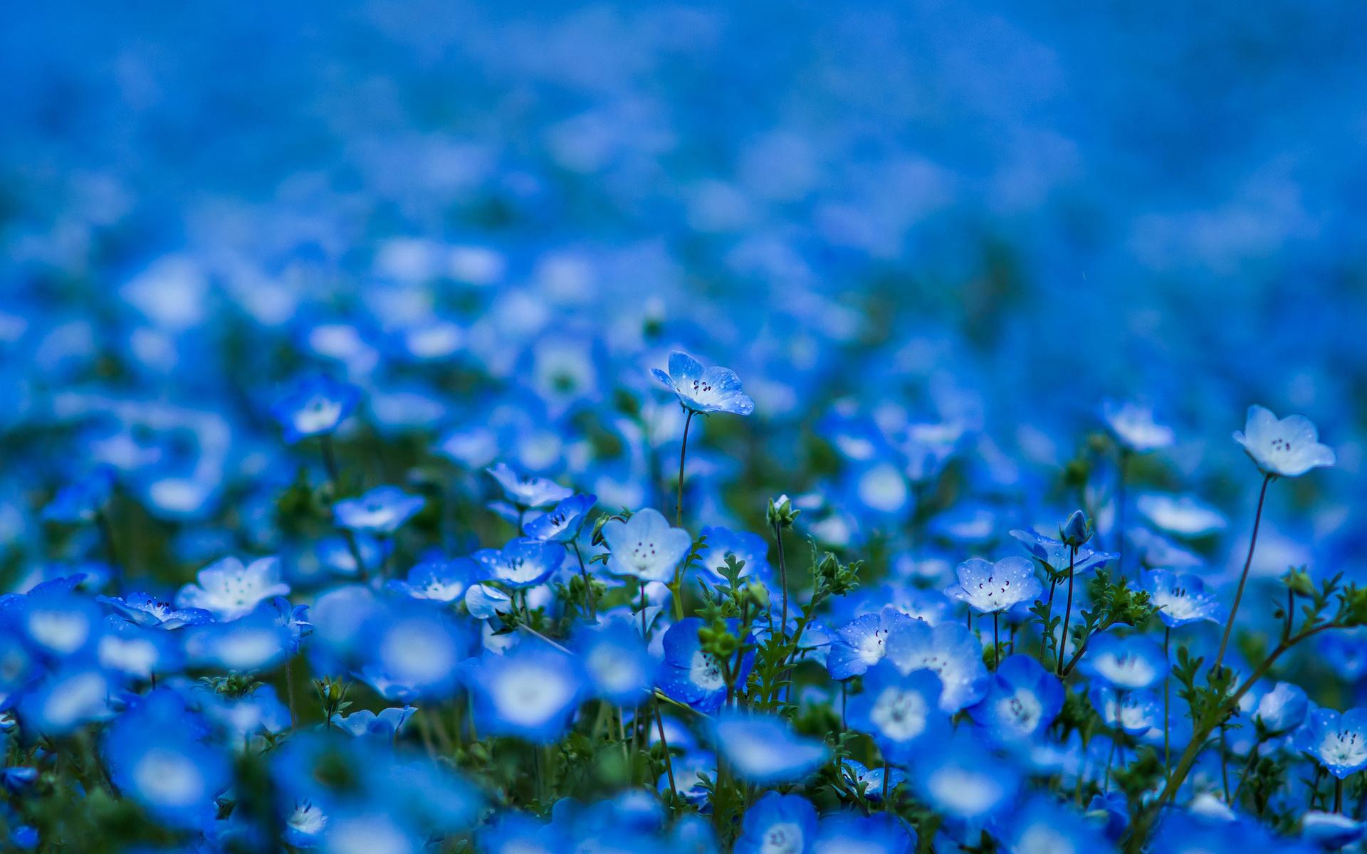 Картинка синие голубые цветы