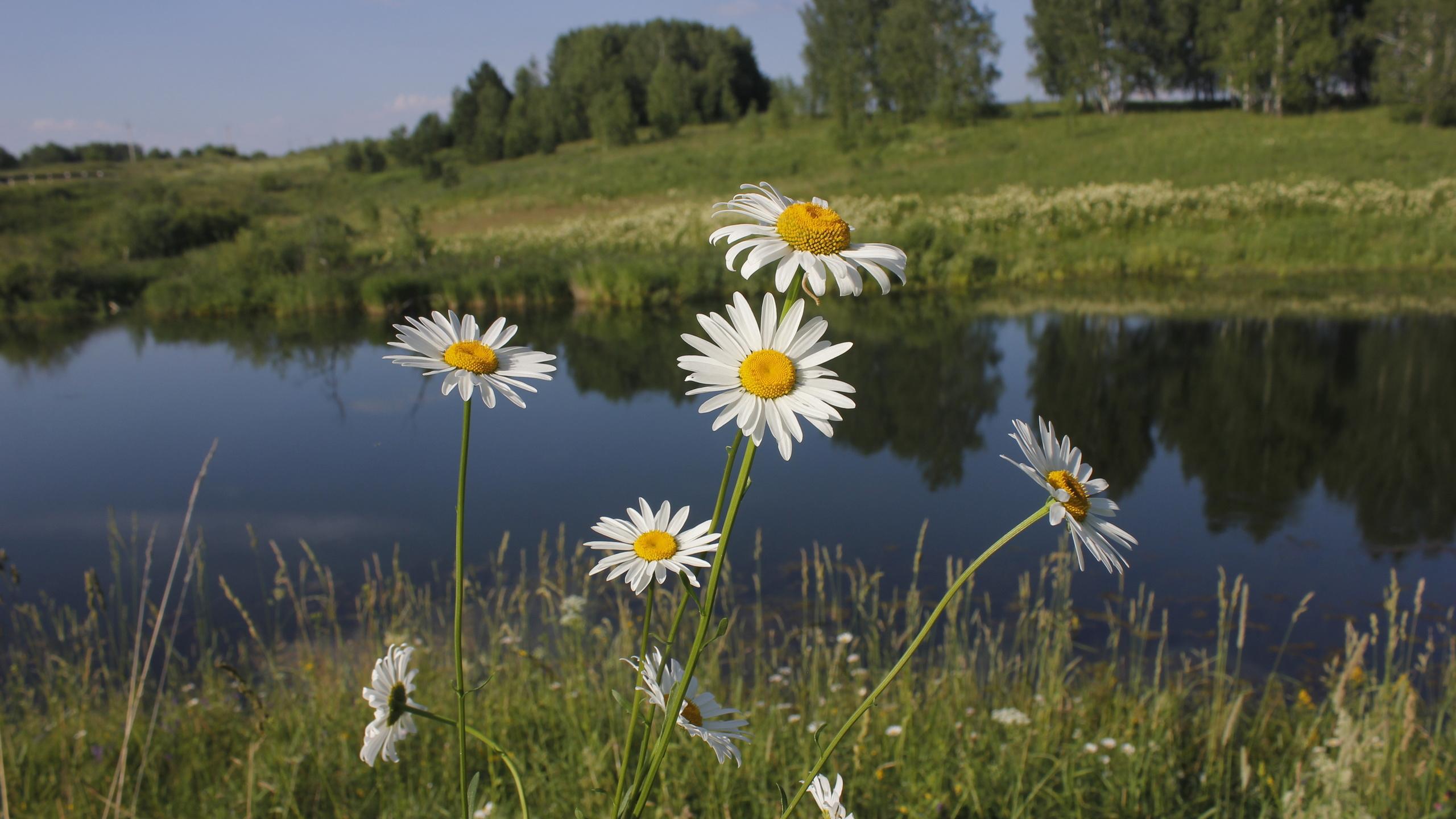 Картинки днем, картинки поля с цветами и речкой