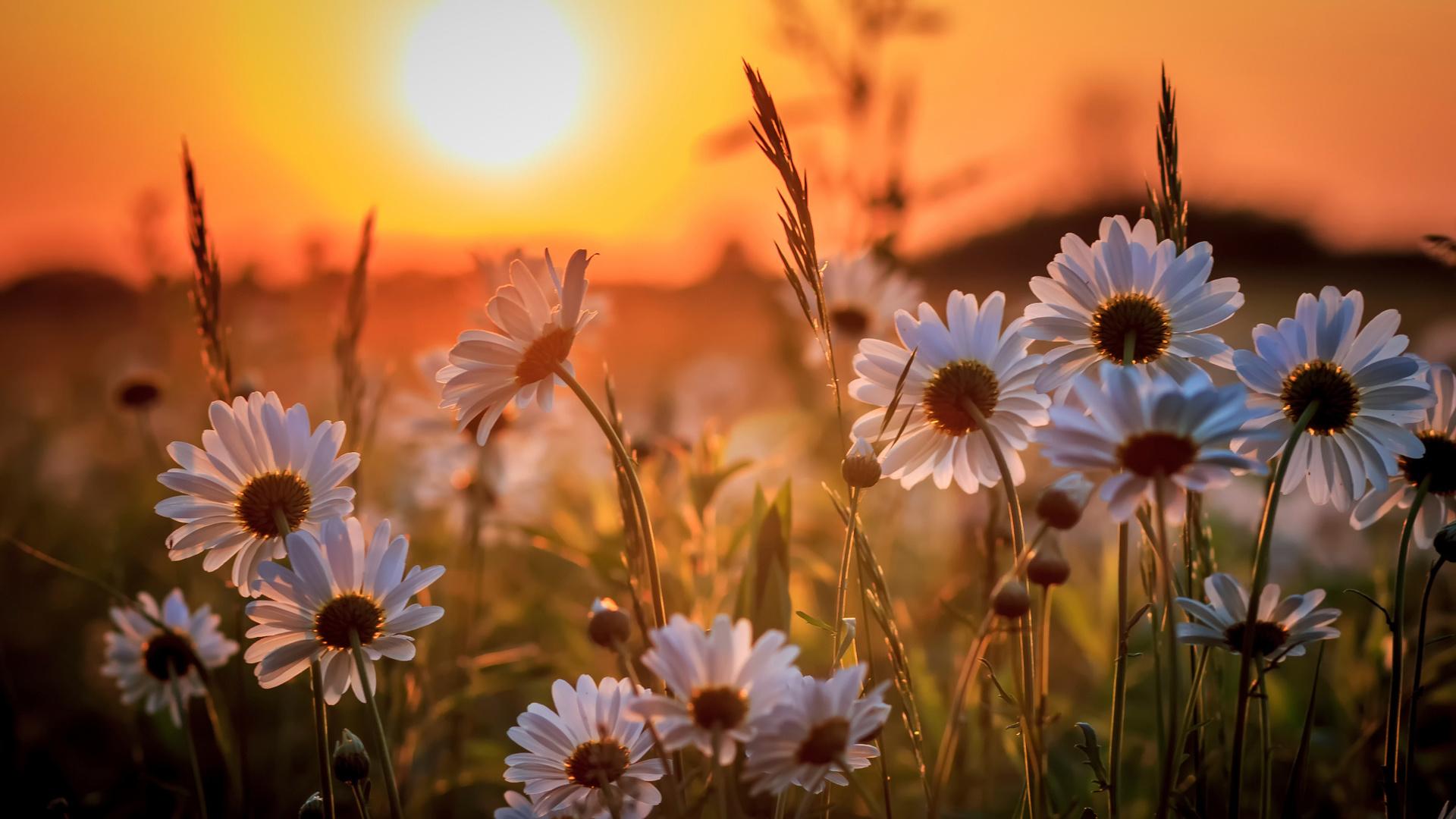 Картинки поле с цветами и солнце, картинки рентгенологи