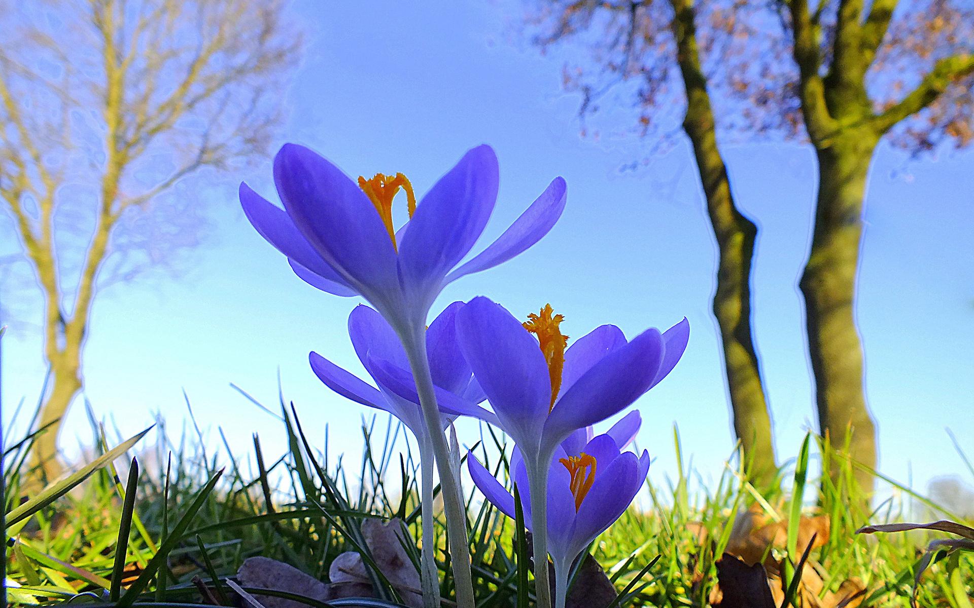 Весна фото картинки весенние пейзажи цветы природа